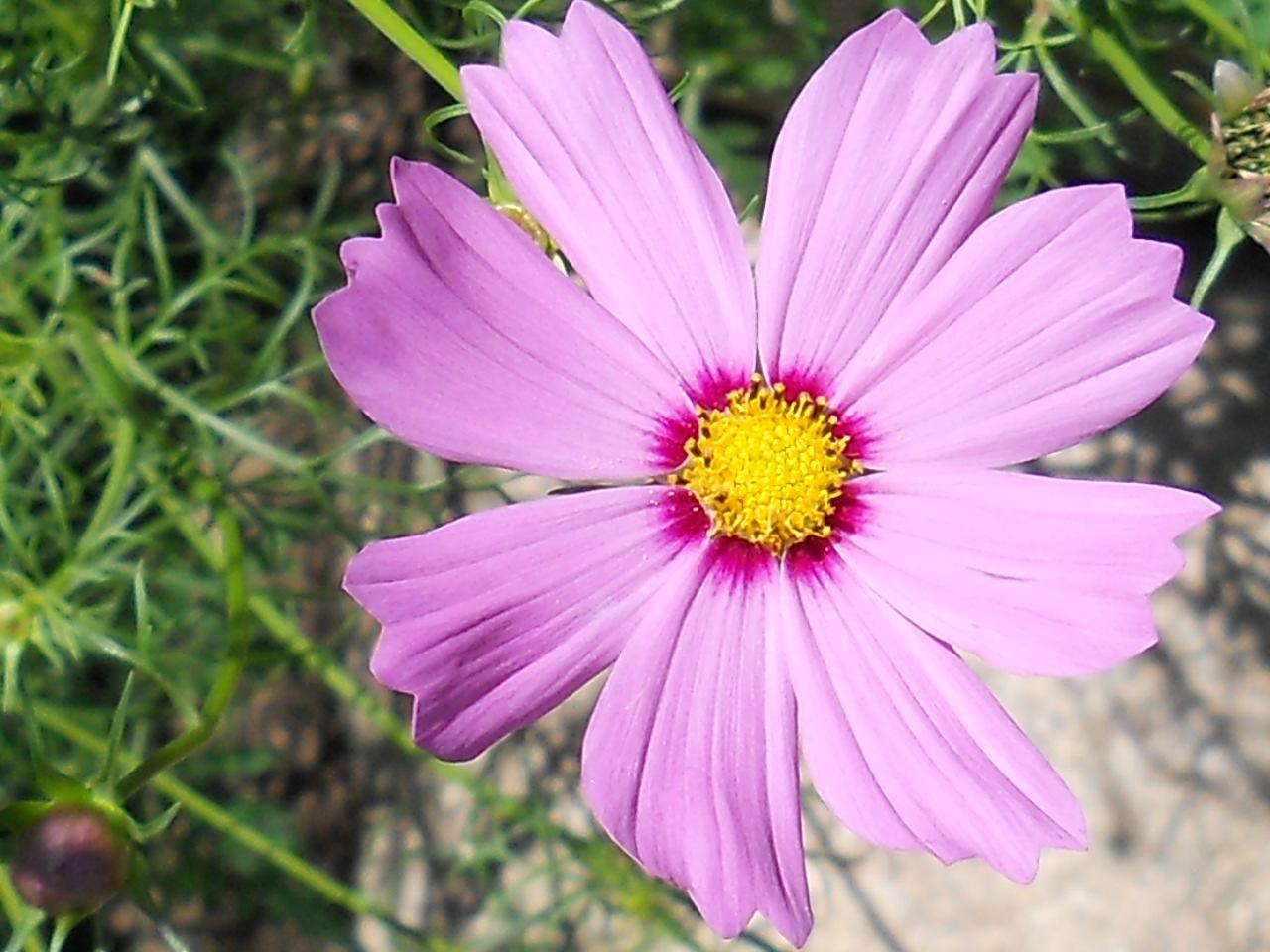 Purple flower summer