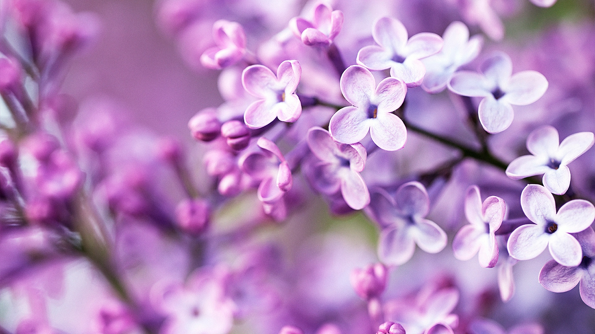 Purple Flowers Tumblr Background 1 HD Wallpapers