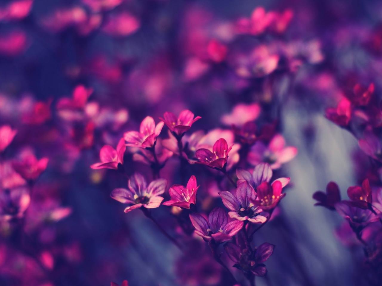 Description: The Wallpaper above is Little purple flowers Wallpaper in Resolution 1280x960. Choose your Resolution and Download Little purple flowers ...