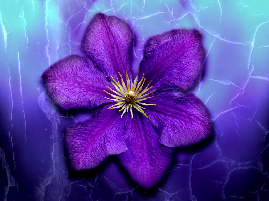 Purple Flowers Images High Quality 6 HD Wallpapers