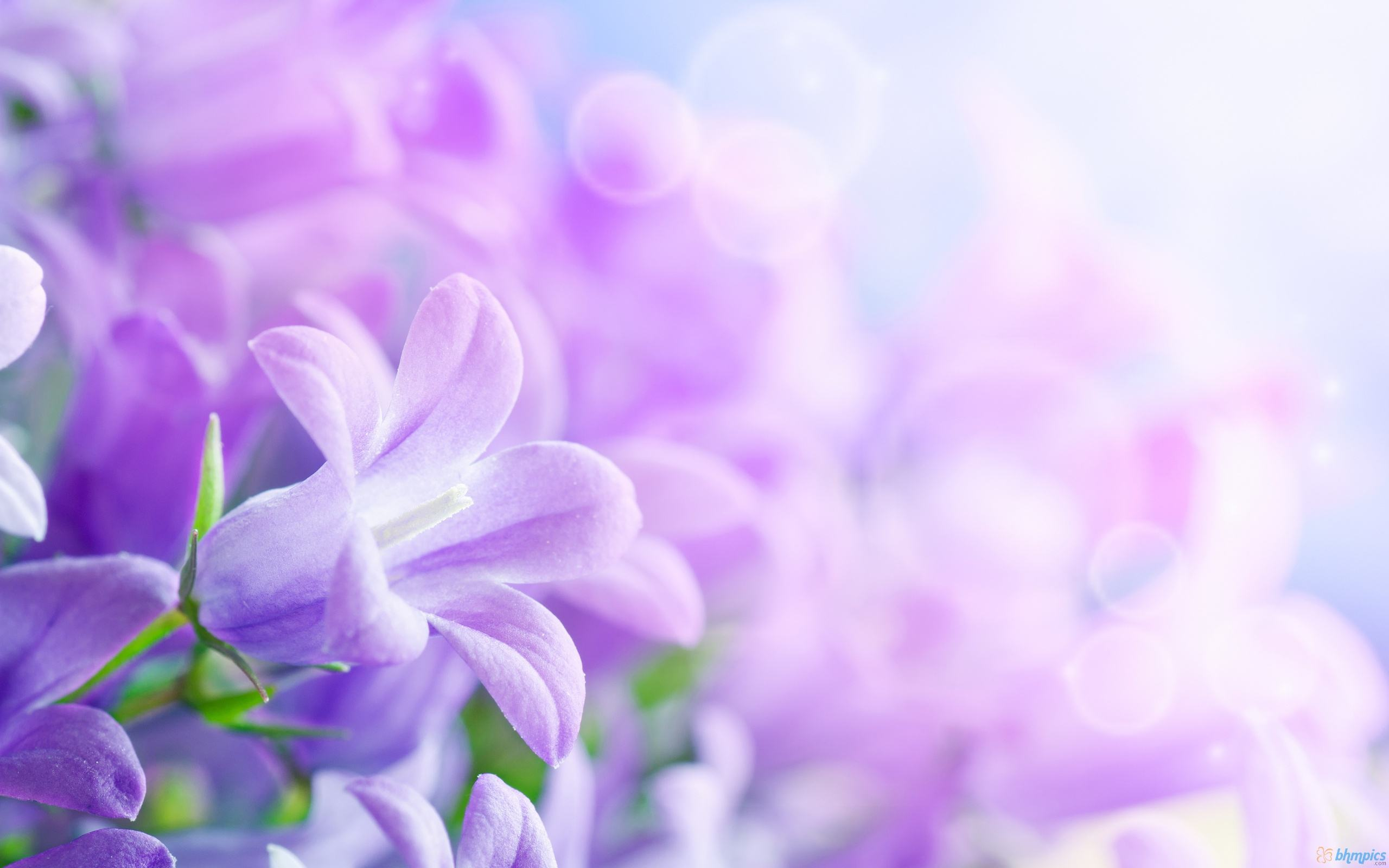 Purple Flowers Background