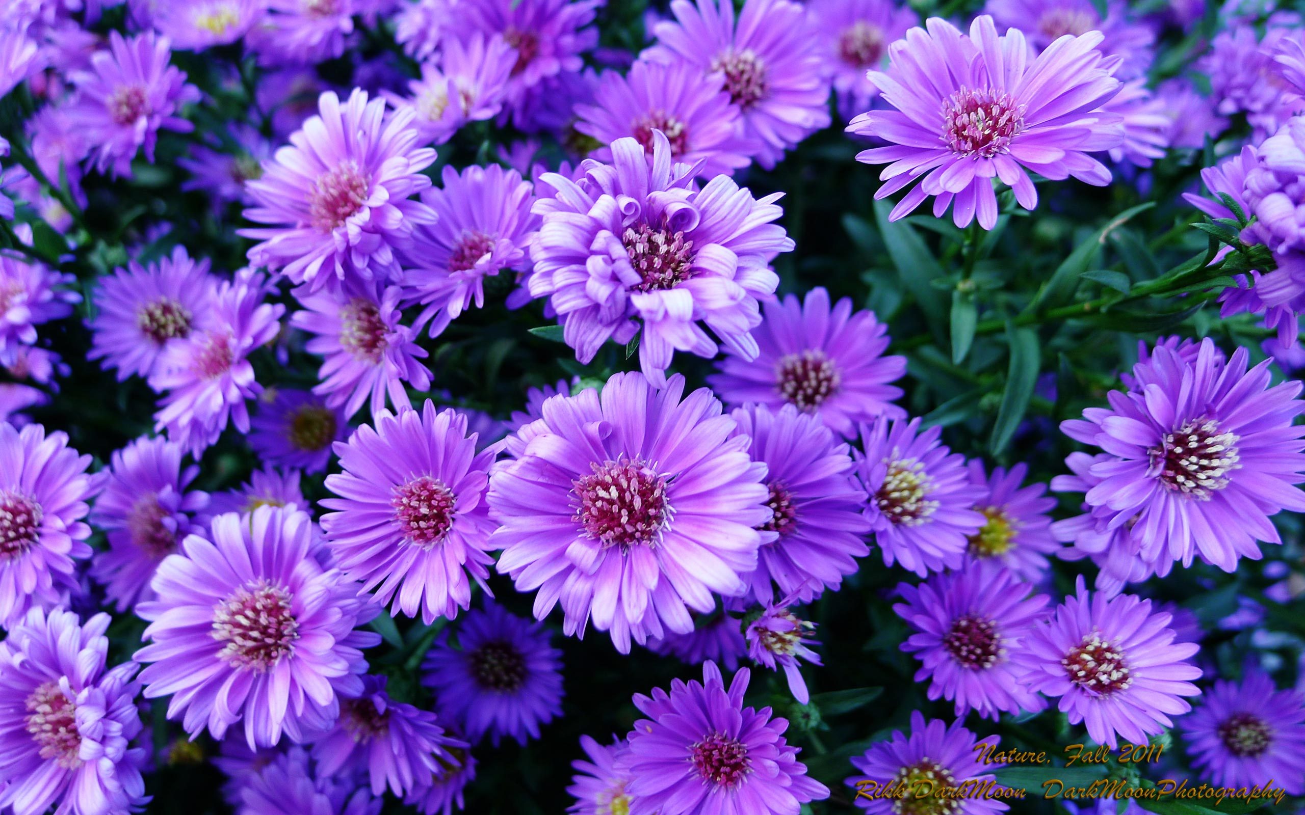 Beautiful Purple Flowers for Fall