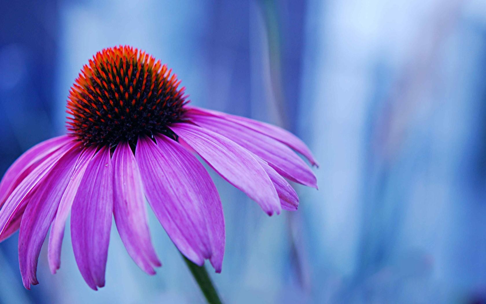 Flowers Macro Purple Flowers Fresh New Hd Wallpaper