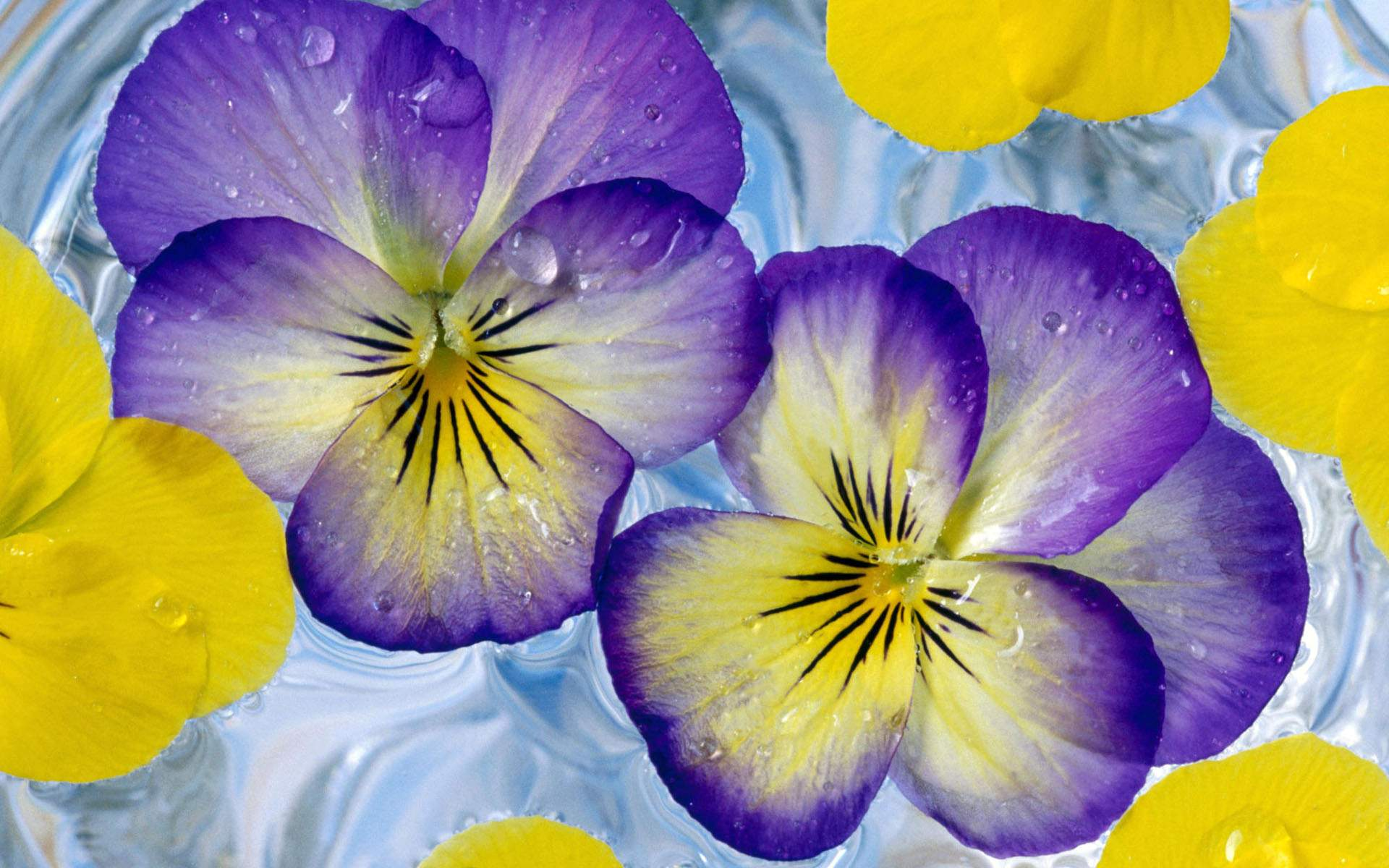Purple yellow flowers