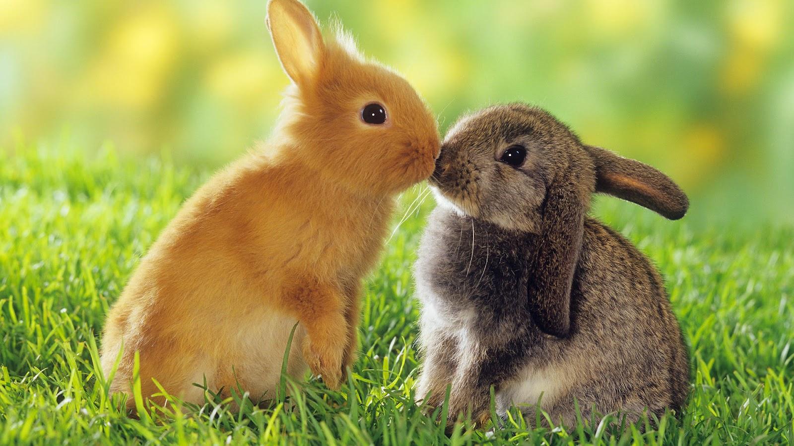 ... Rabbits HD Wallpapers ...