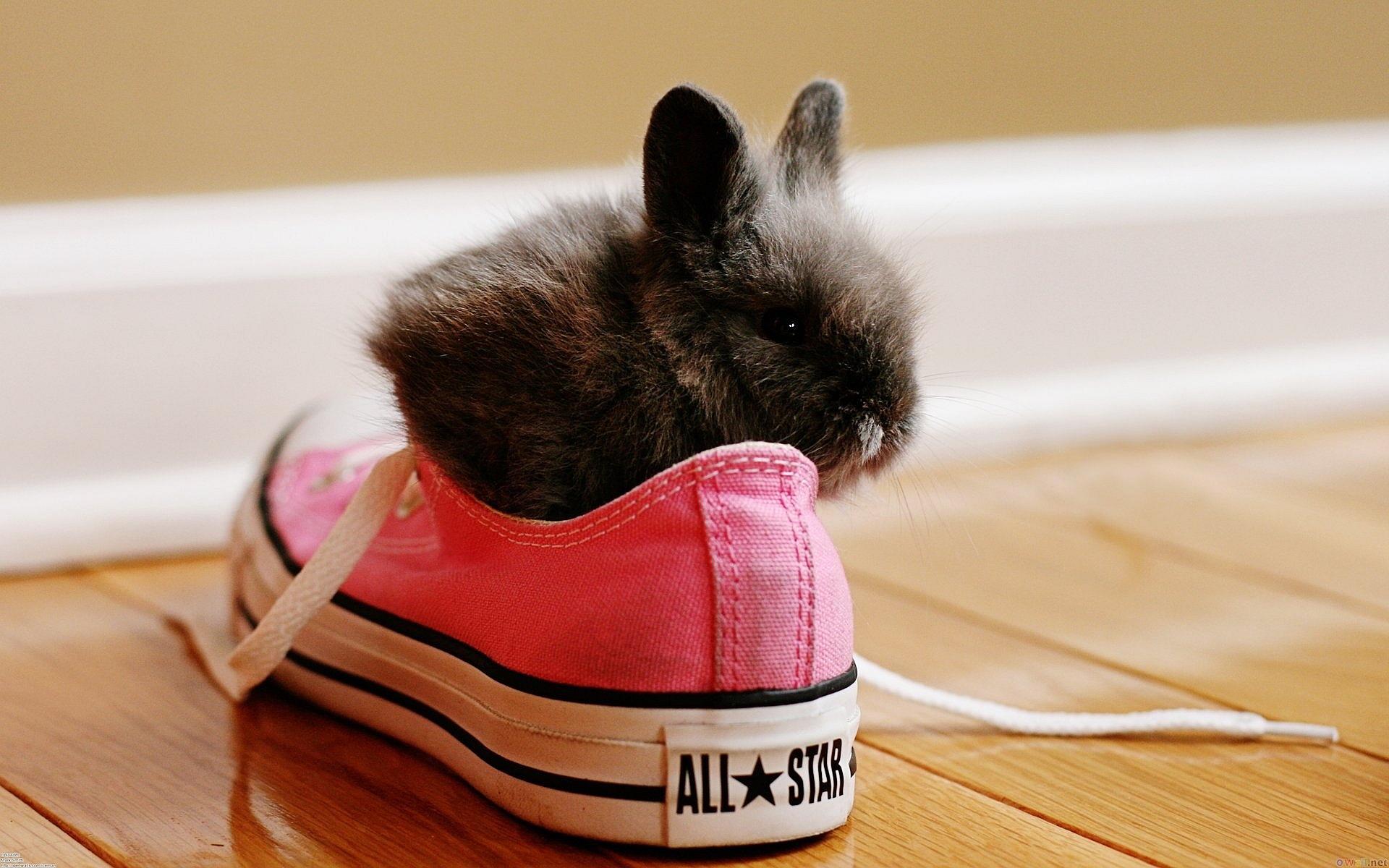 Rabbit in sneaker