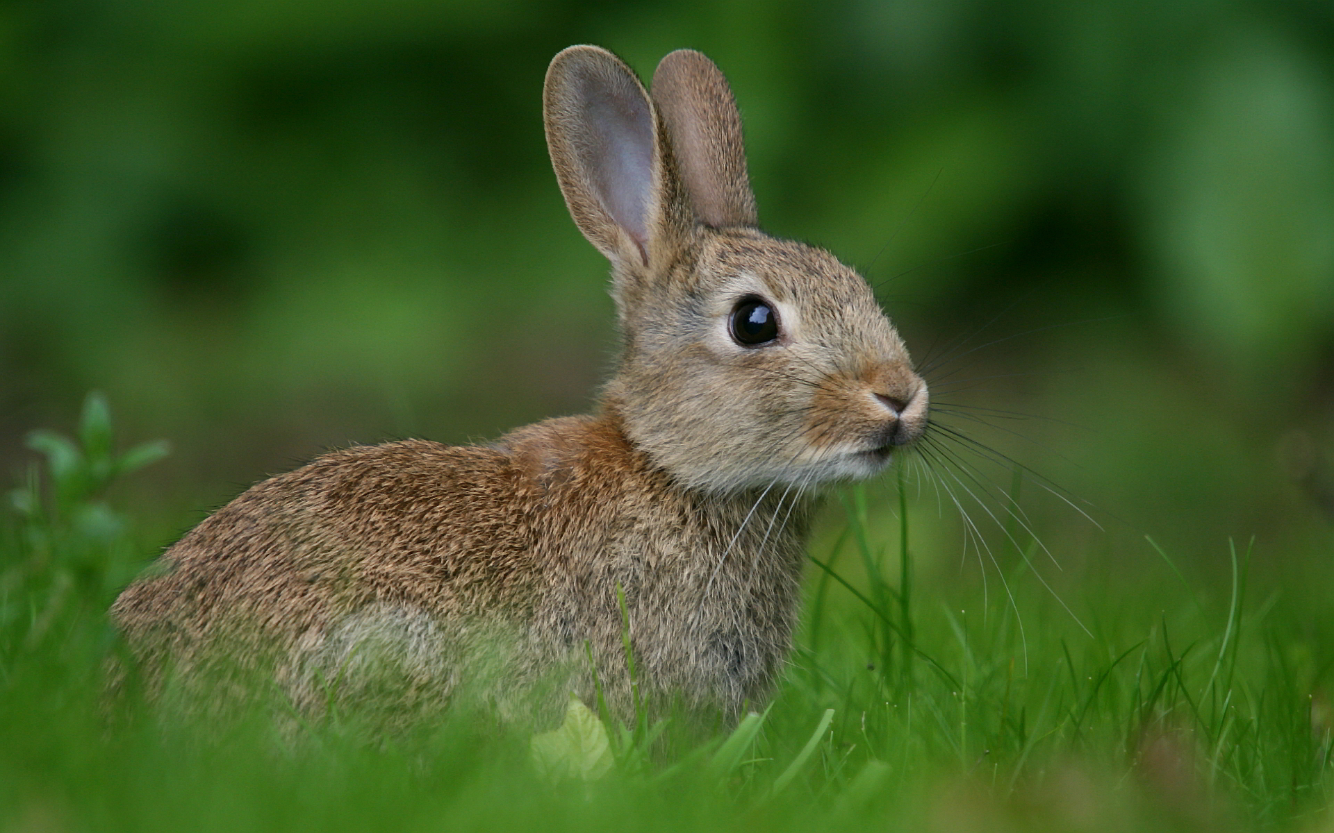Rabbit meadow