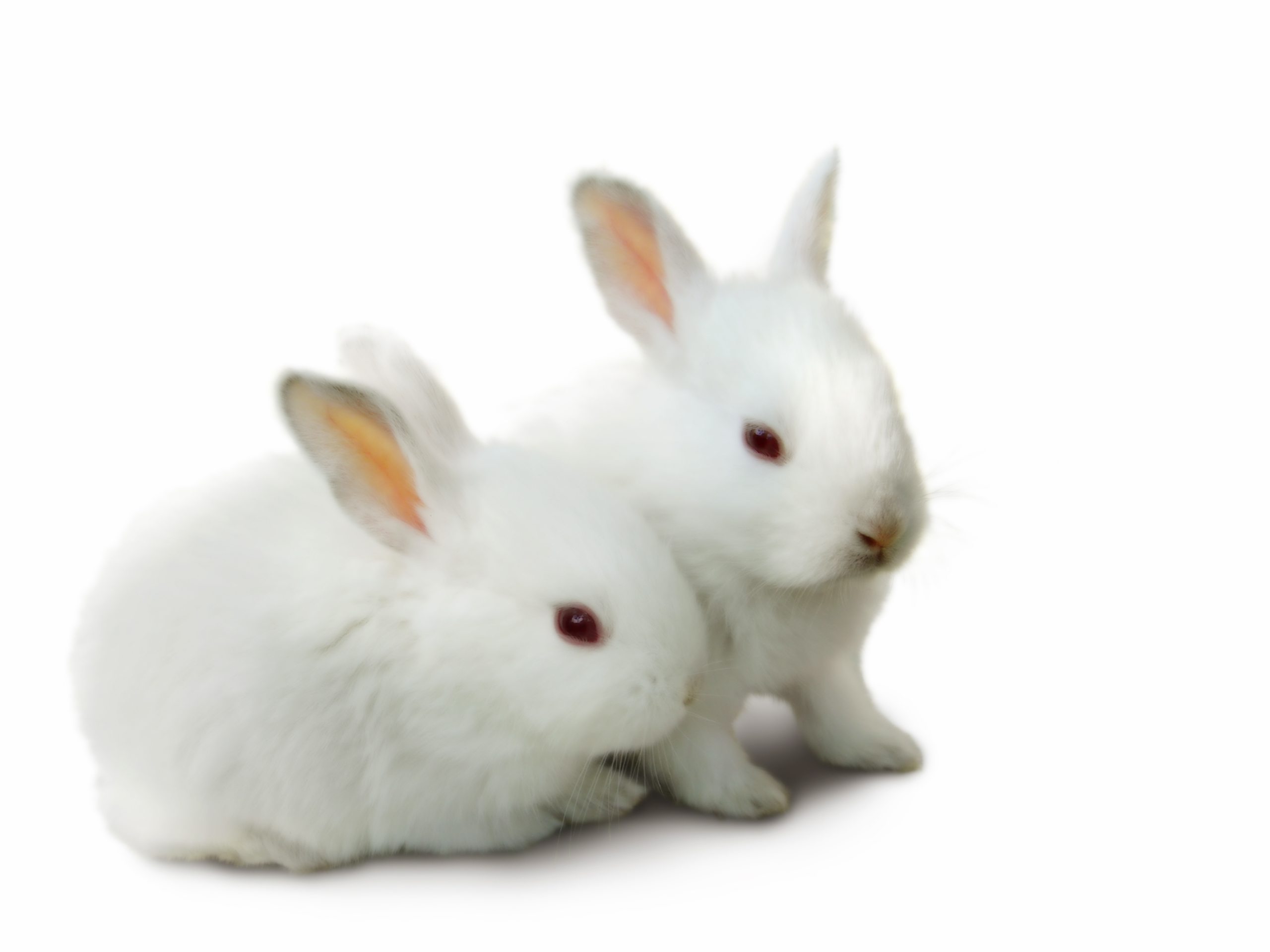 Rabbit desktop