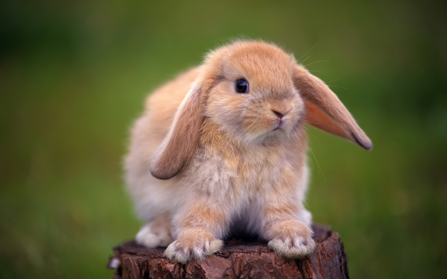 cute rabbit hd images widescreen desktop rabbit wallpapers background