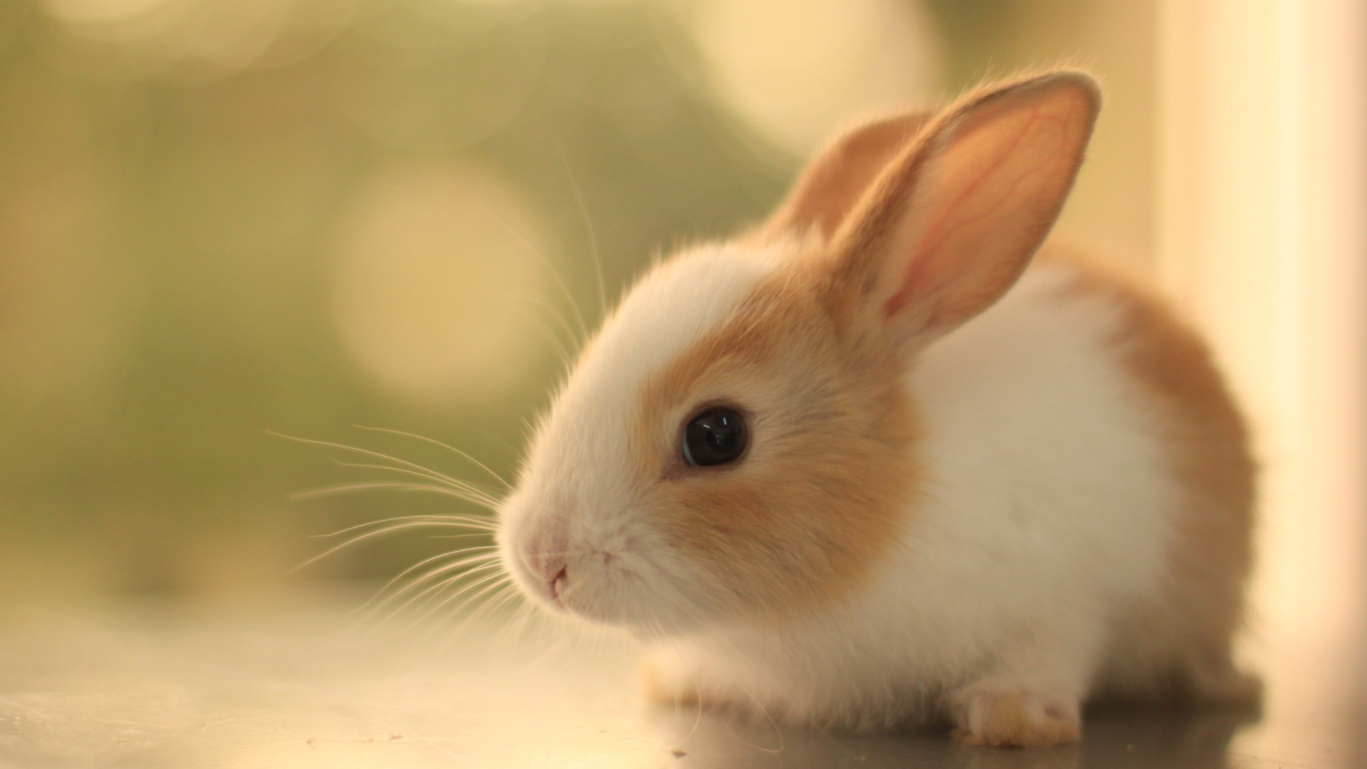 Rabbit Full Hd Wallpaper Cariwall