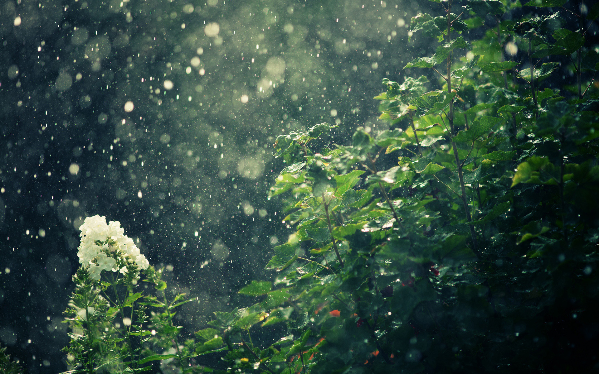 HD Wallpaper | Background ID:312372. 1920x1200 Photography Rain