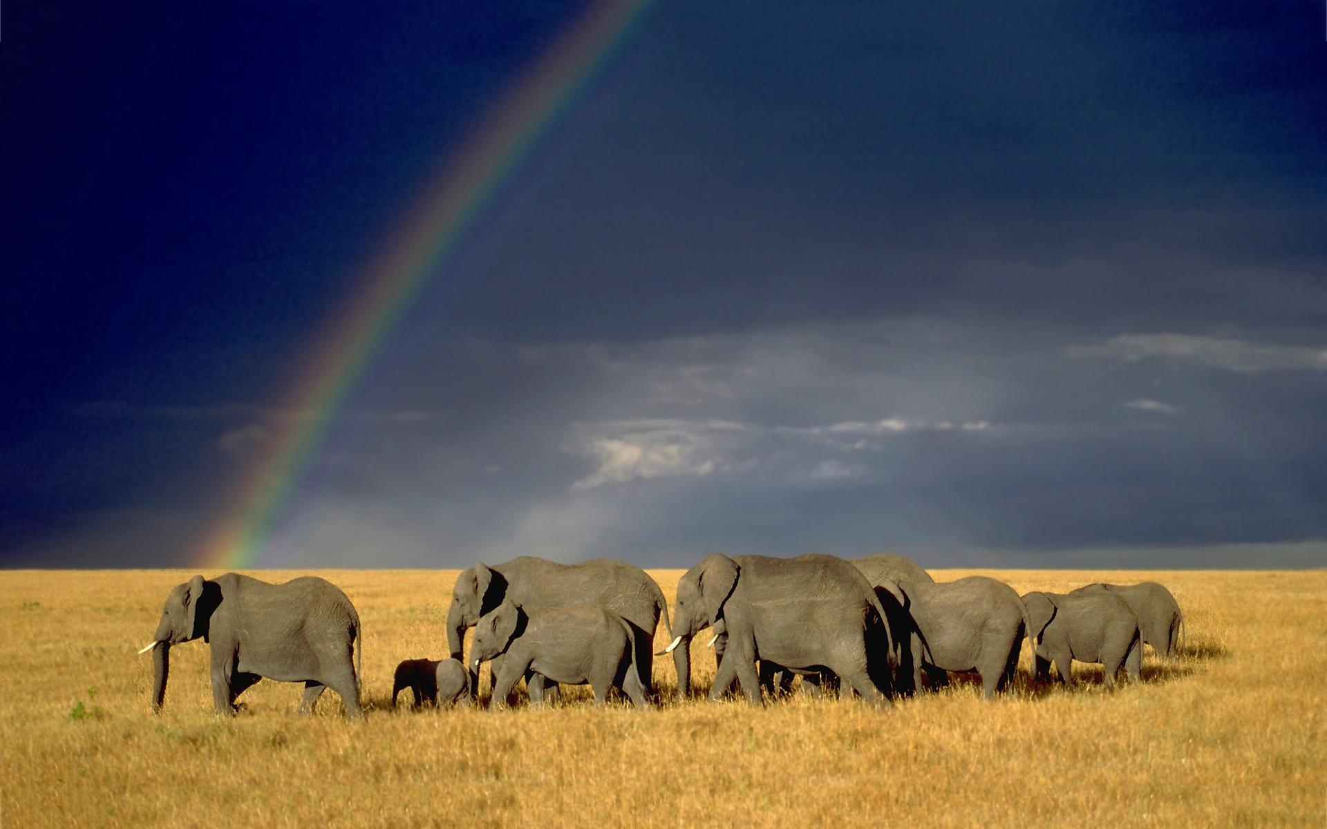 Rainbow elephant herd