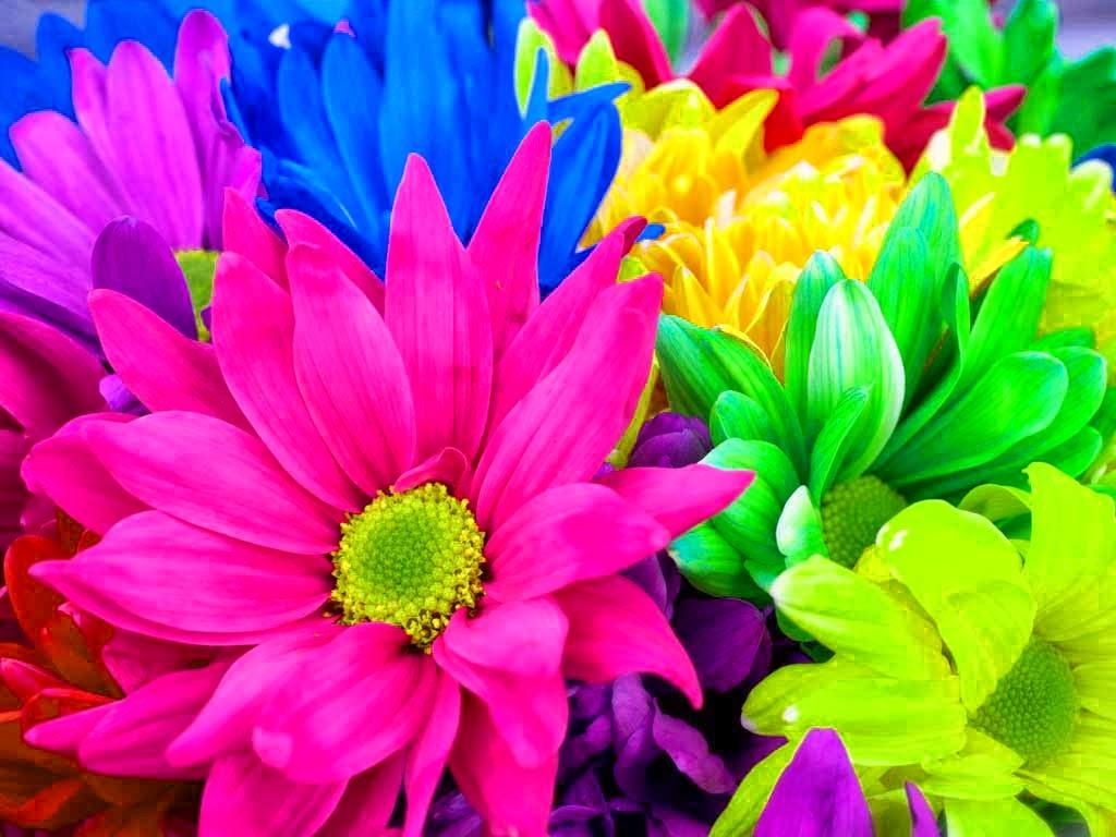 Rainbow Flowers 17370 1024x768 px