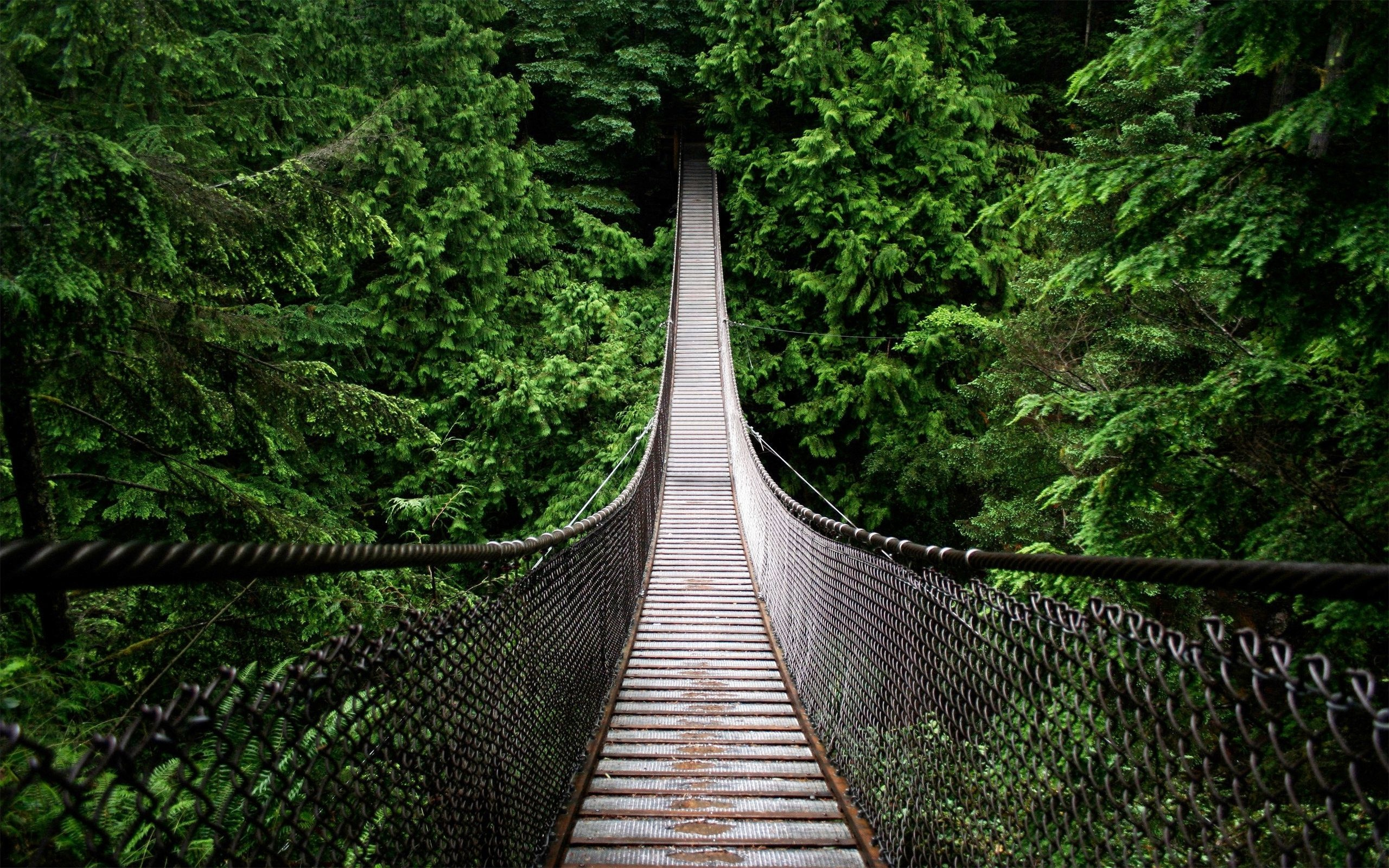 Rainforest Bridge Wallpaper