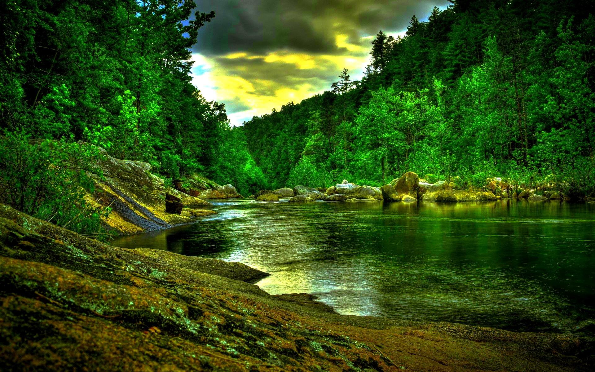 Rainforest Wallpaper