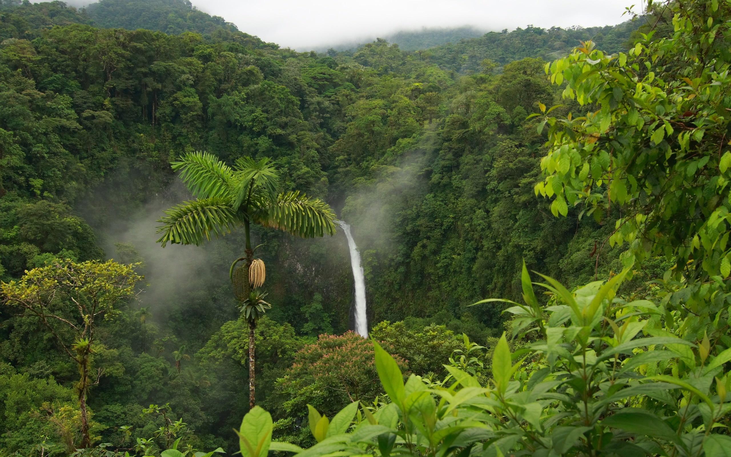 ... Rainforest Wallpaper ...