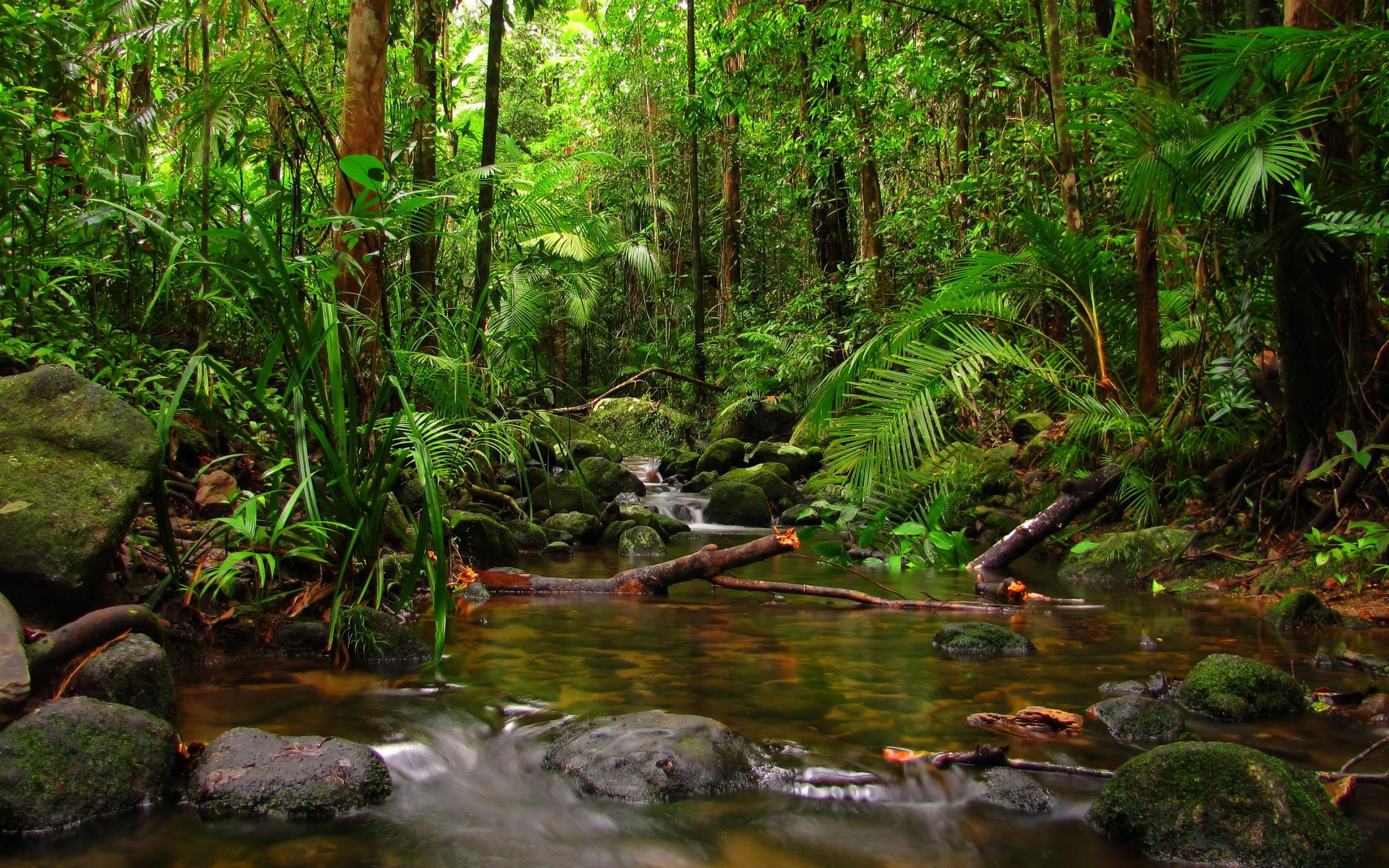 HD Rainforest Wallpaper