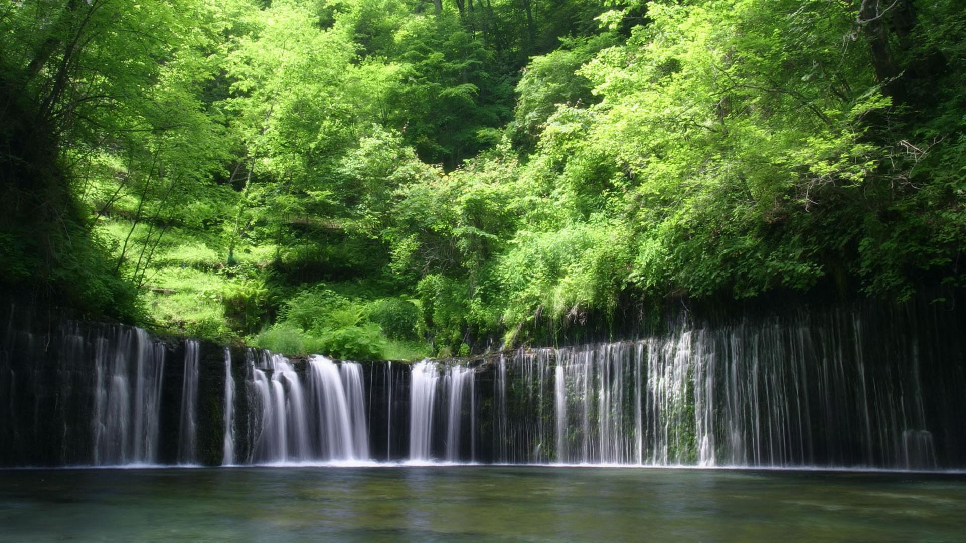 Rainforest Wallpaper; Rainforest Wallpaper ...