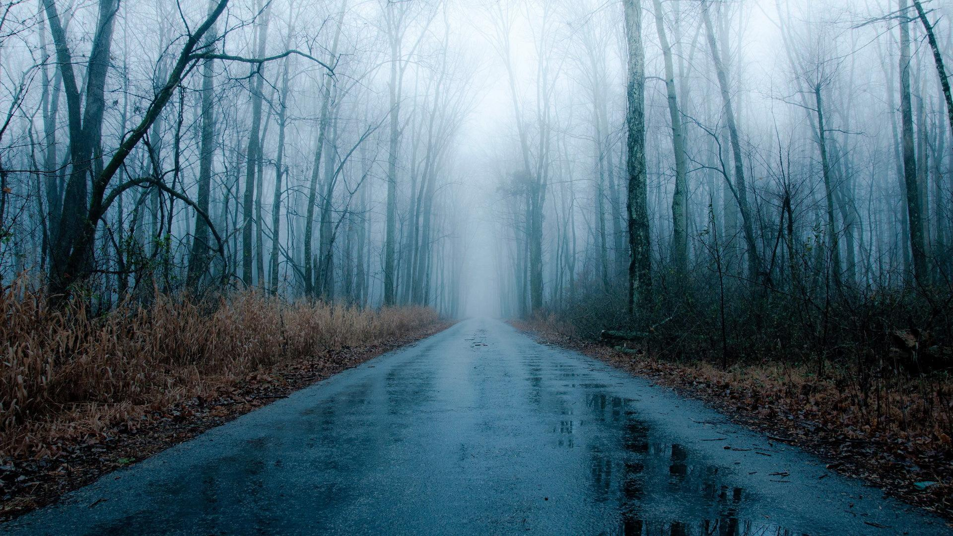 Foggy rainy road through bare forest HQ WALLPAPER - (#158945)