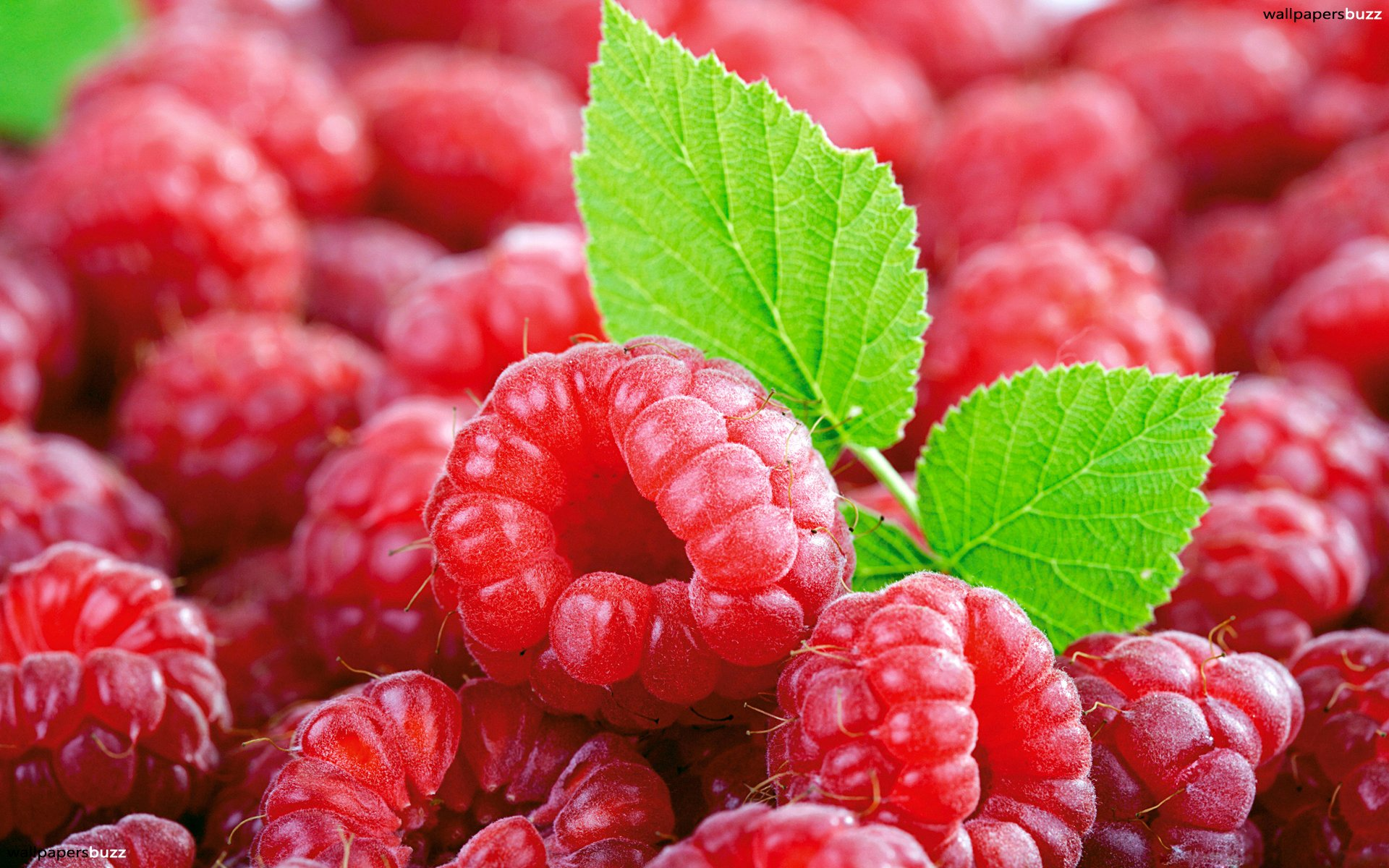 Tons Of Raspberries