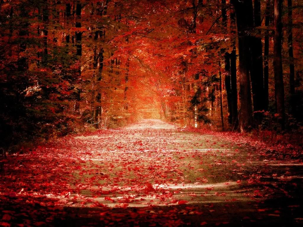 Red Autumn Trees 24954 Hd Wallpapers