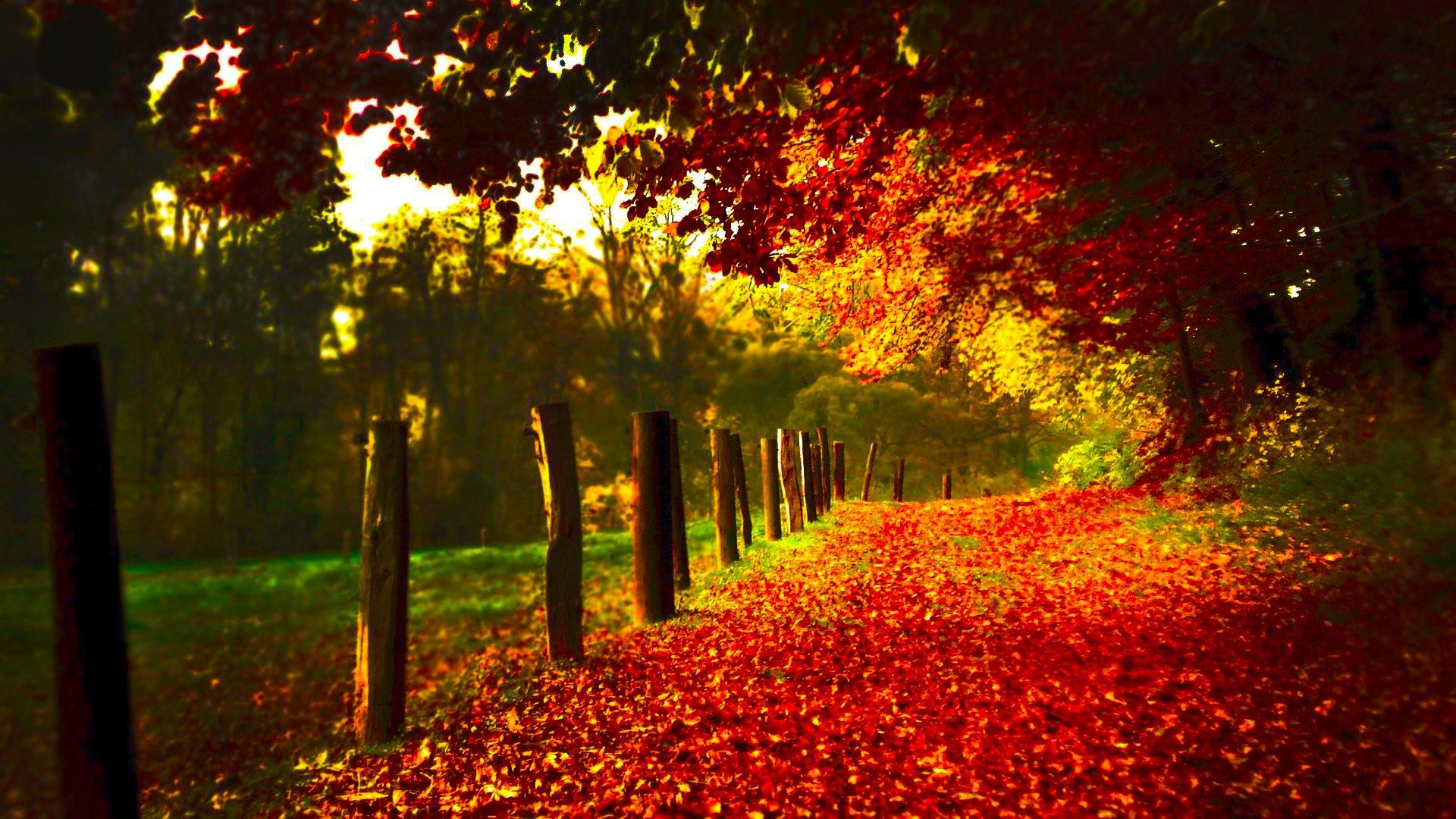 Autumn Scenery 23960