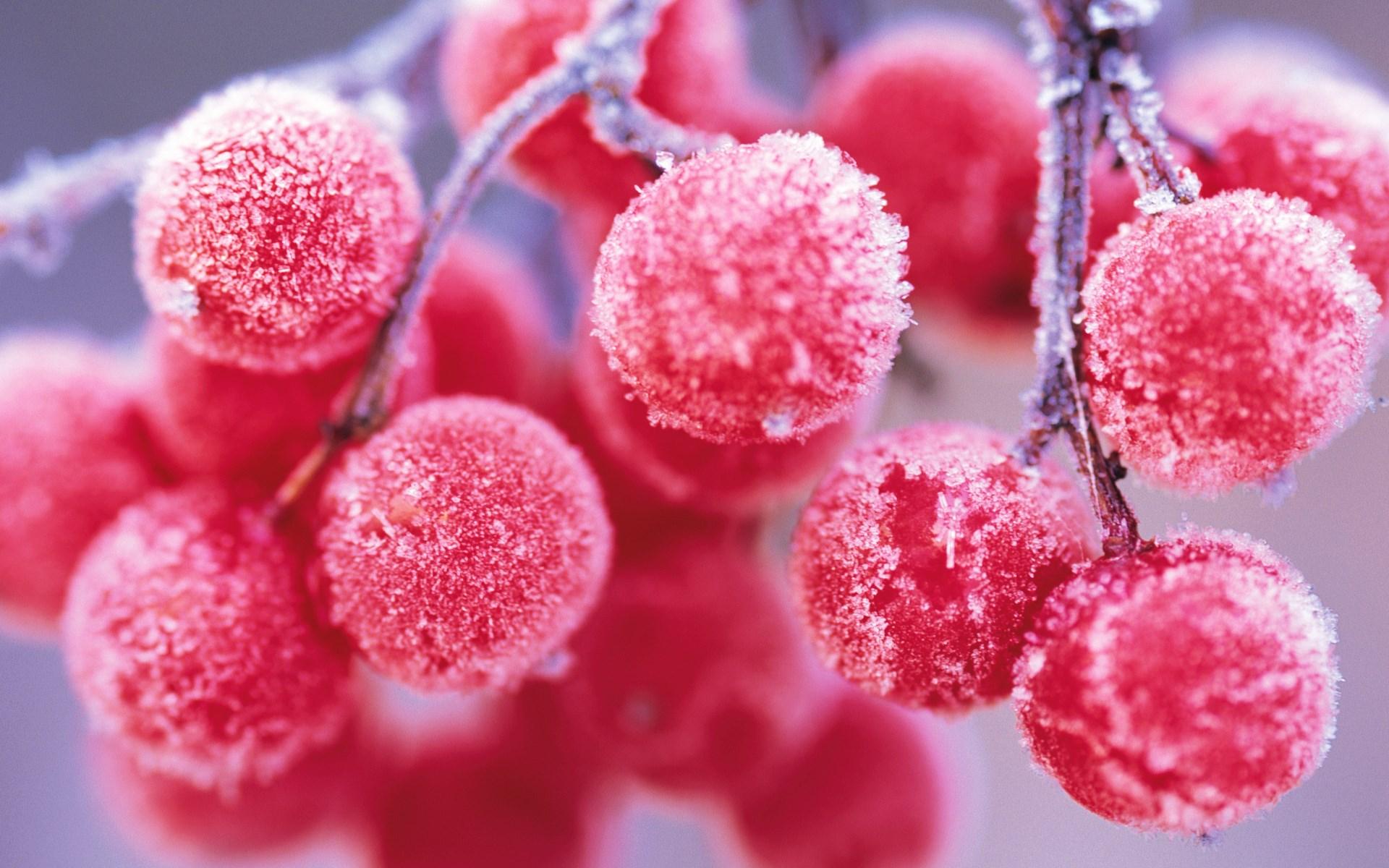 Red Berries Winter Nature