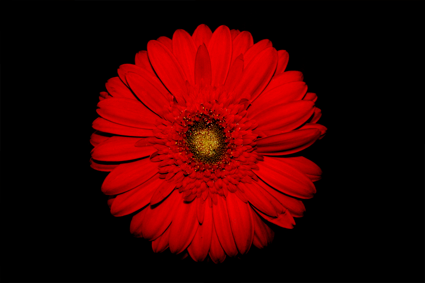 Red flower wallpaper 1440x960 78403 - Red flower desktop wallpaper ...