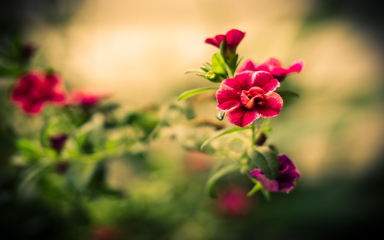 Red flower macro hd