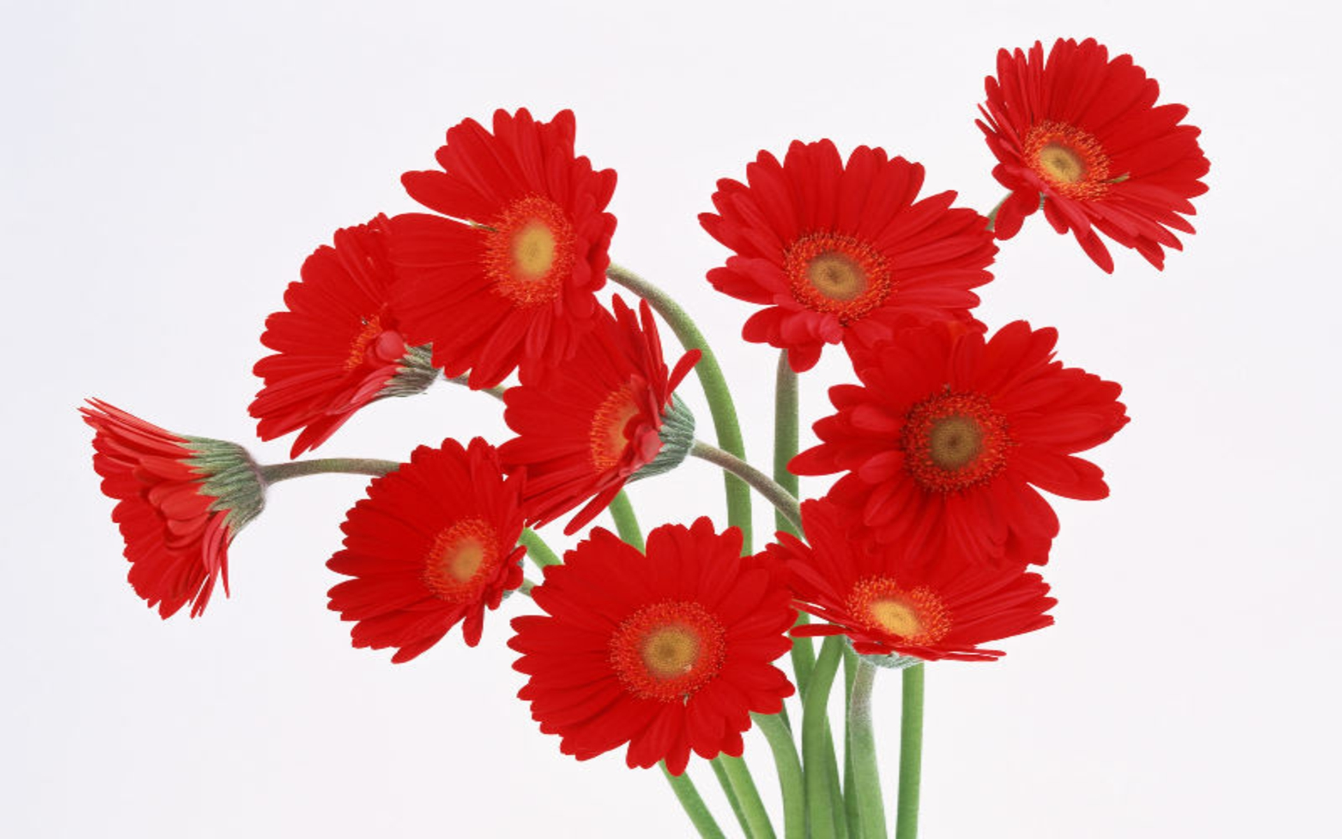 Red Flowers HD wallpapers