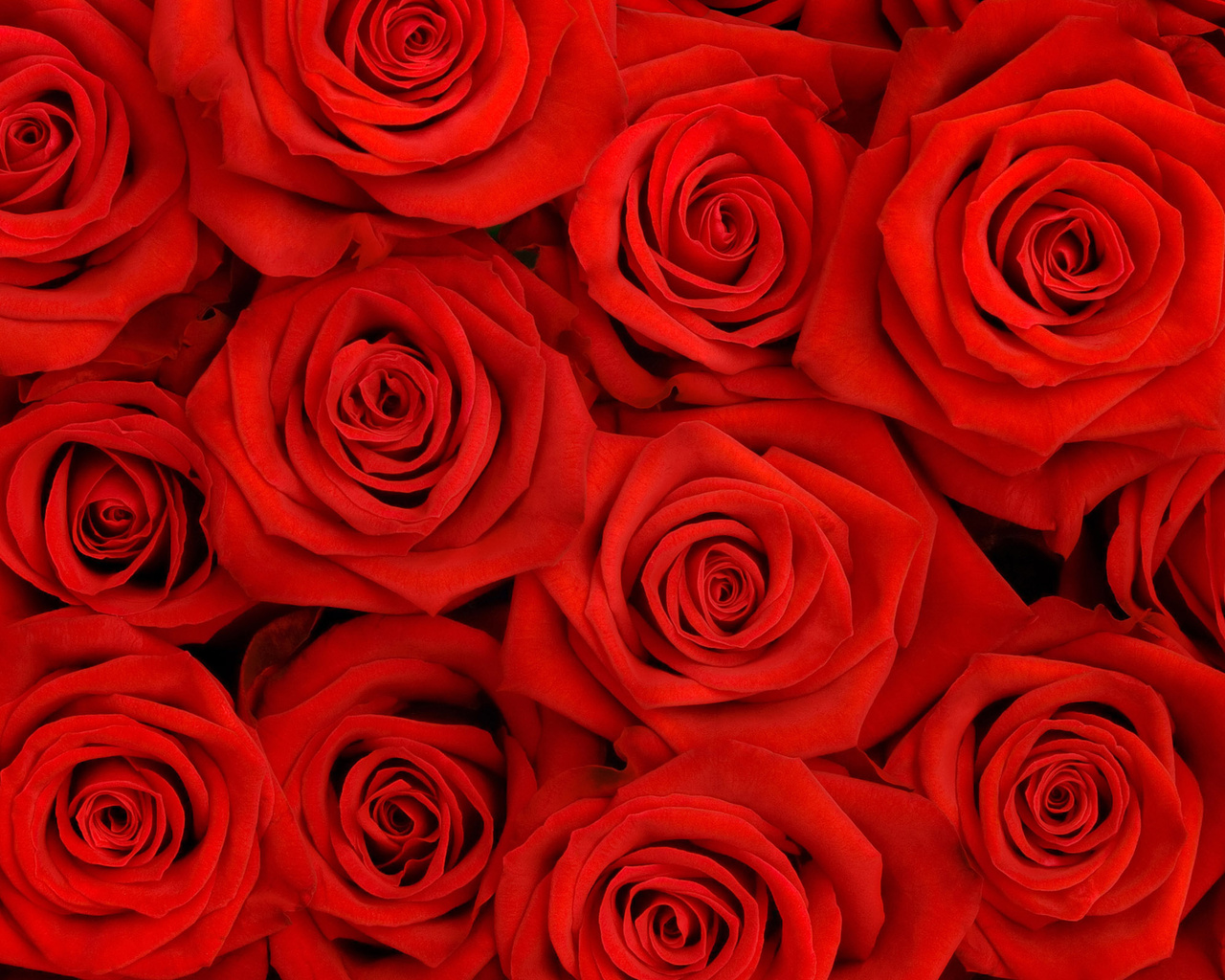 Red Flowers Backround