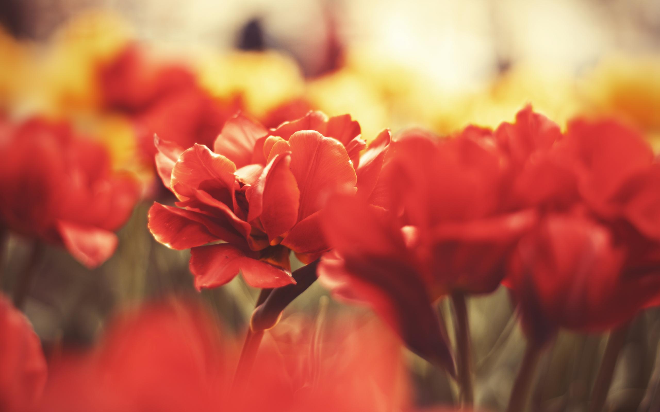Red flowers macro 1
