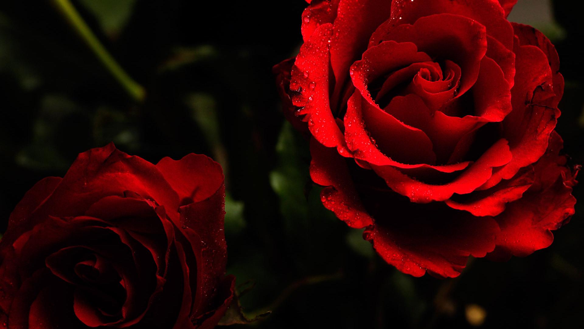 ... Red Flower Wallpaper 7 ...