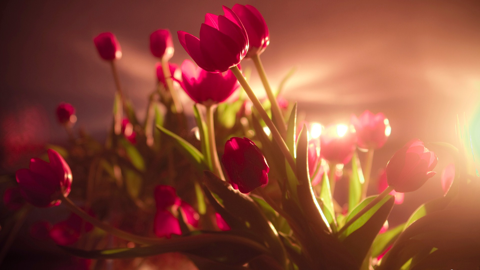 Amazing Red Flowers Wallpaper