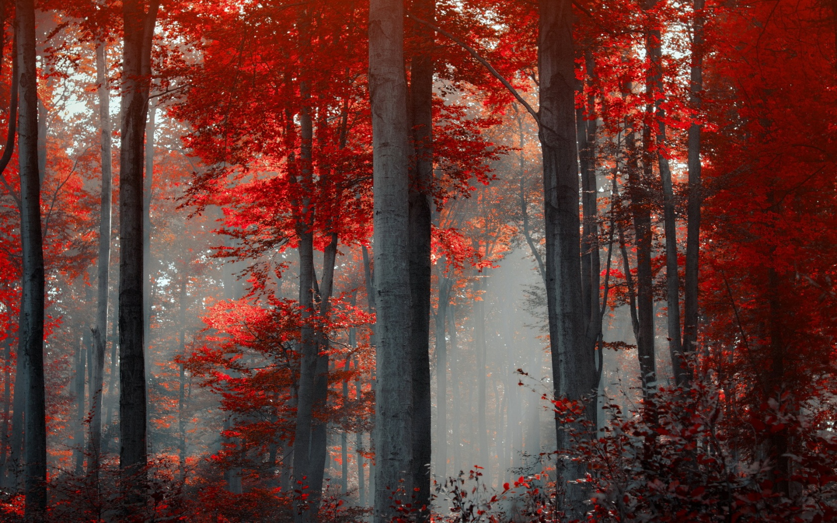 Red Forest Landscape 33539 1920x1080 px