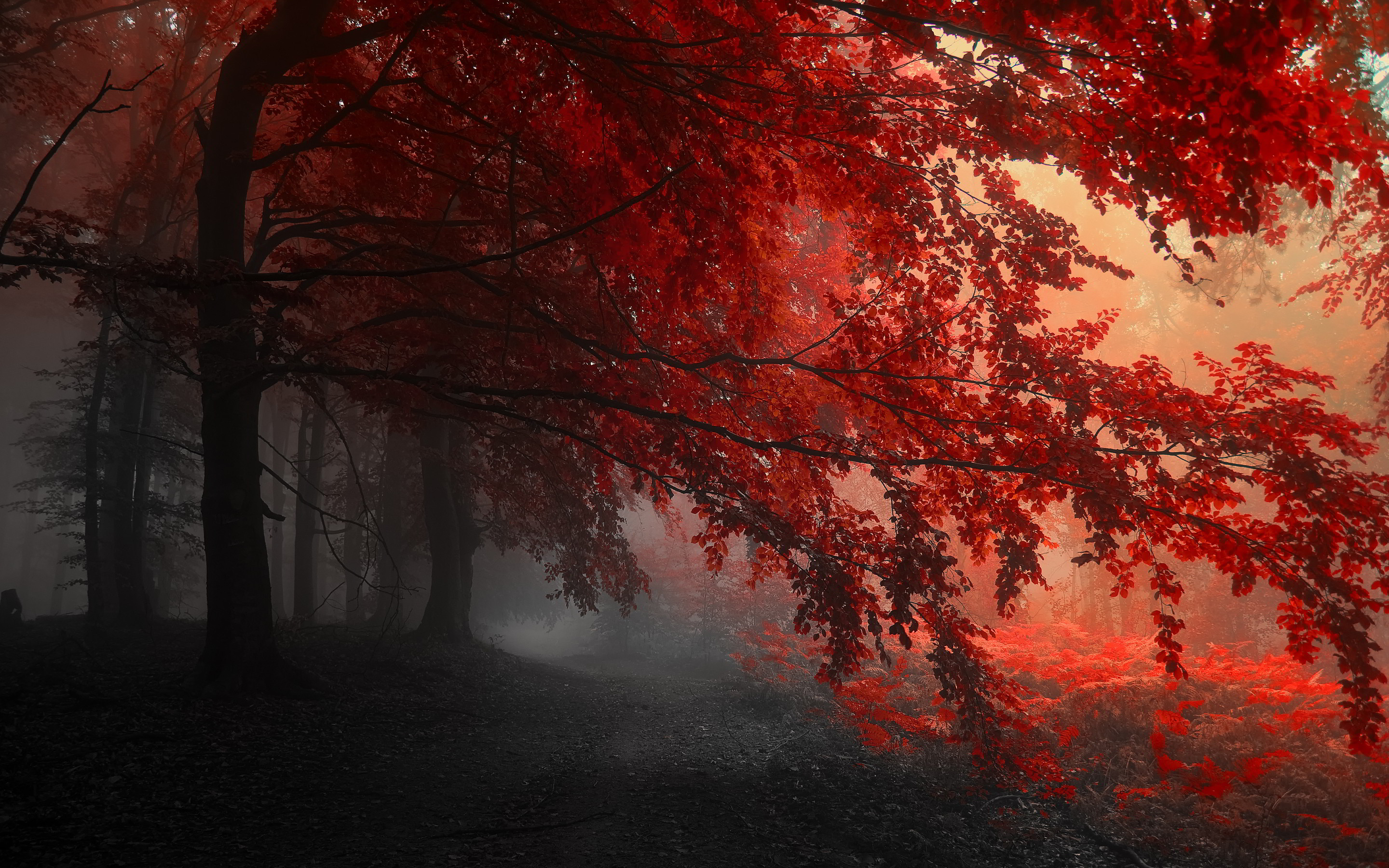 Red Forest Wallpapers