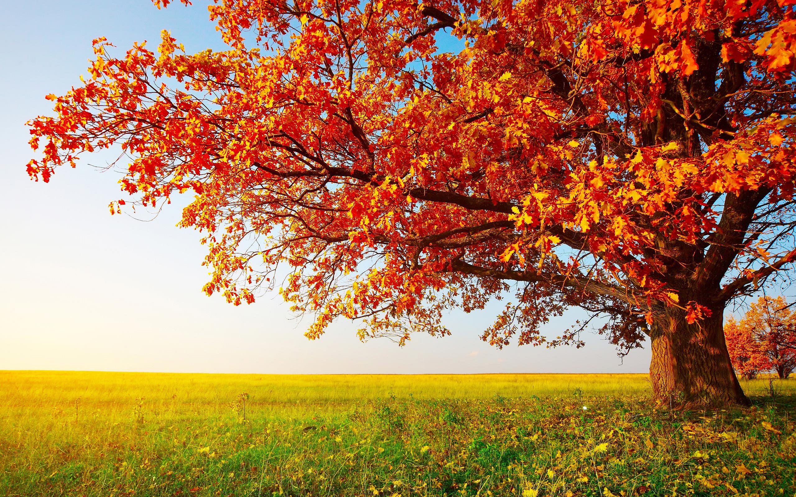 Tree red Leaves