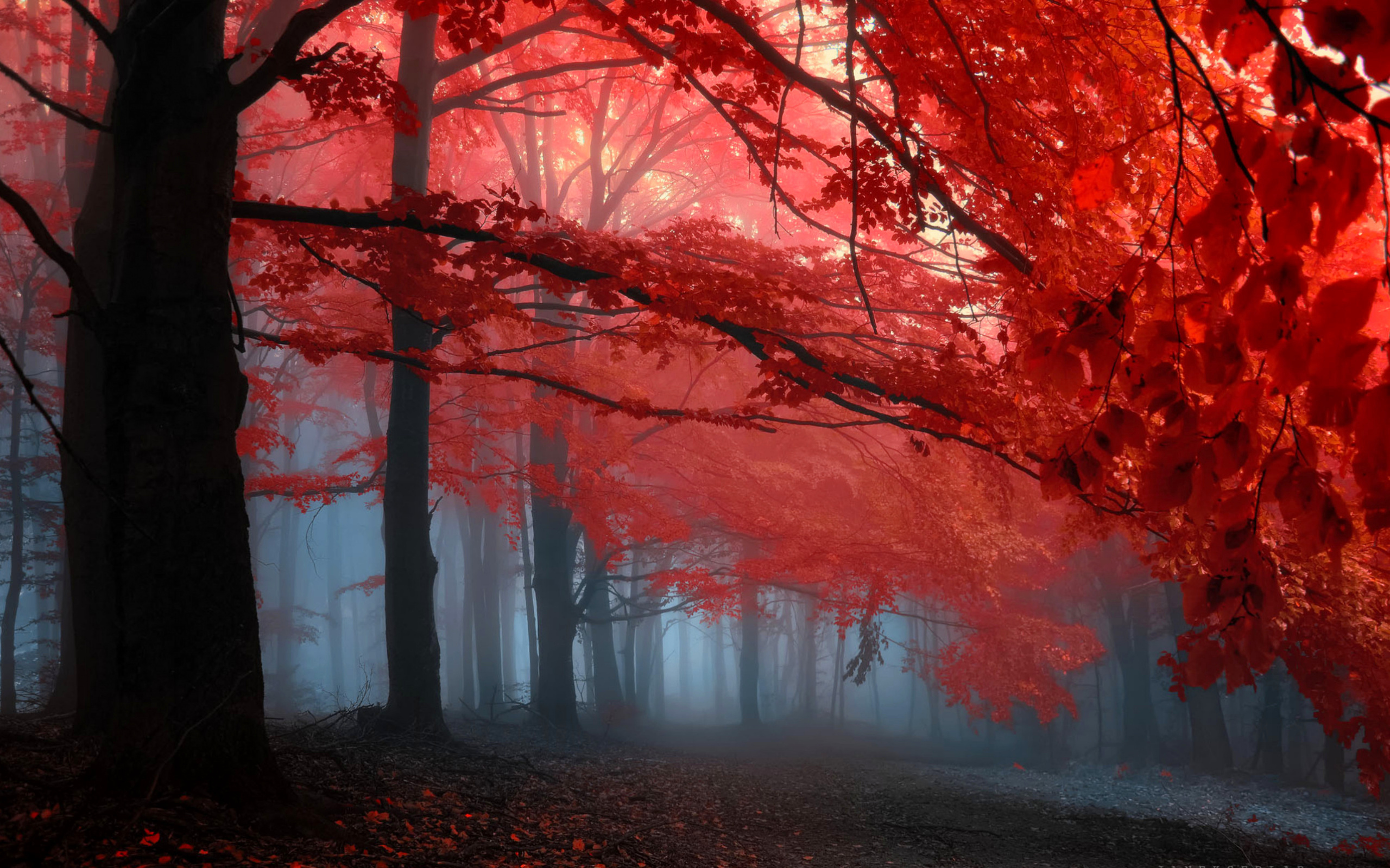 ✫red Leaves In Memories✫ Wide Desktop Background wallpaper
