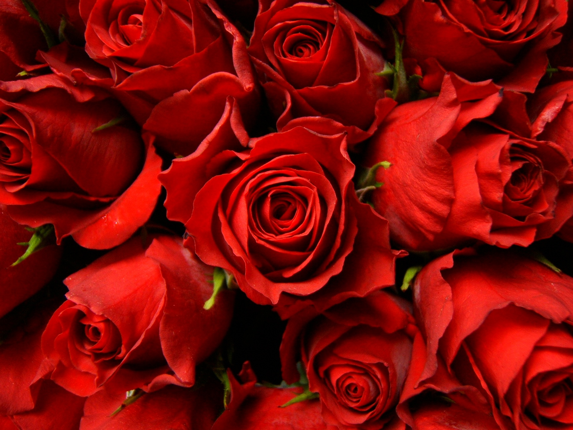 Wallpaper: Red Roses Picture Red Roses Picture - Wallpaper, High Definition, High Quality