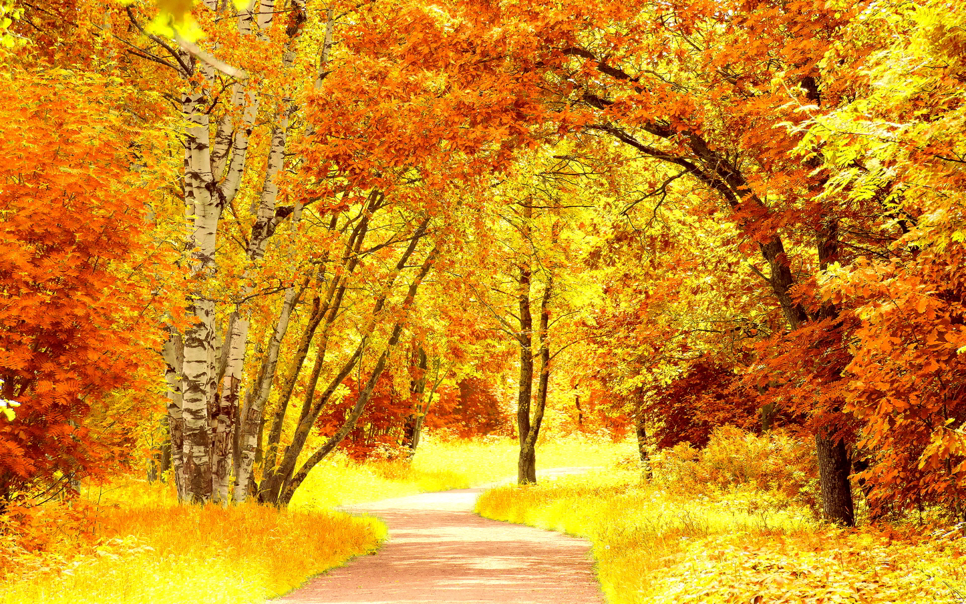 Red yellow autumn scenery
