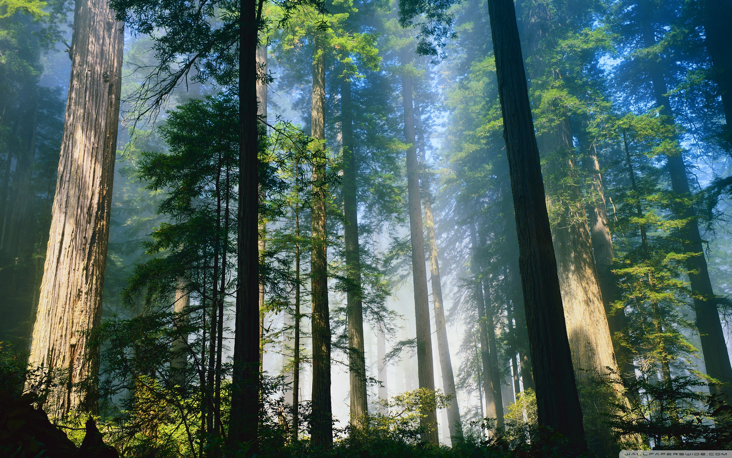 Redwood Wallpapers