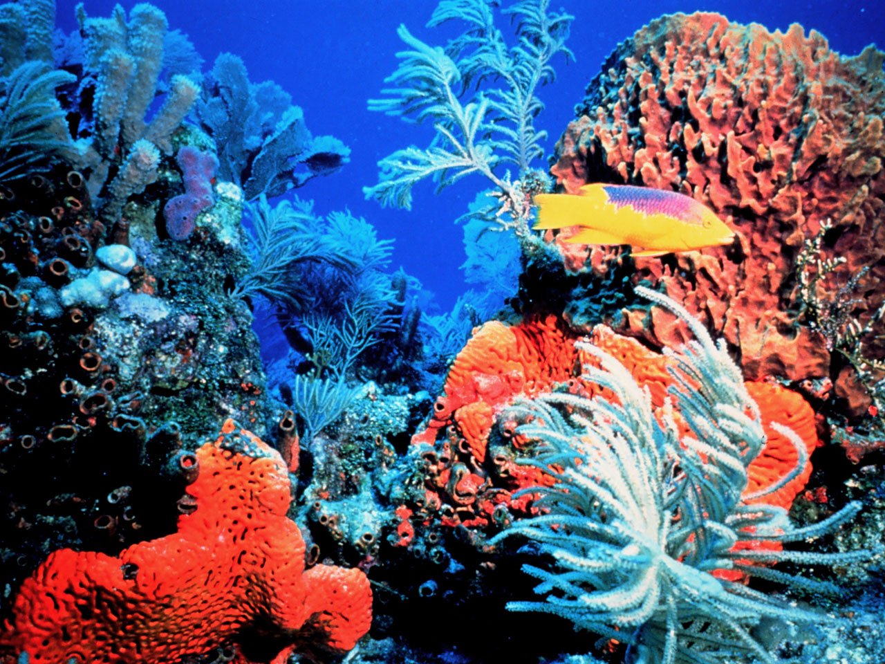 Reef Wallpaper