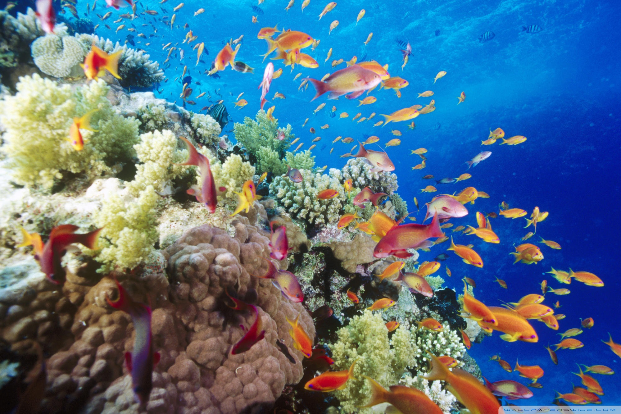 Reef Wallpaper