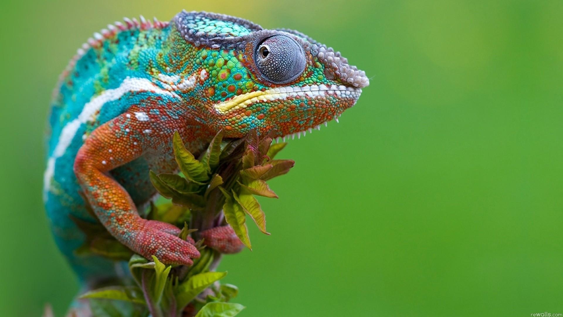 Reptiles - Photo #04