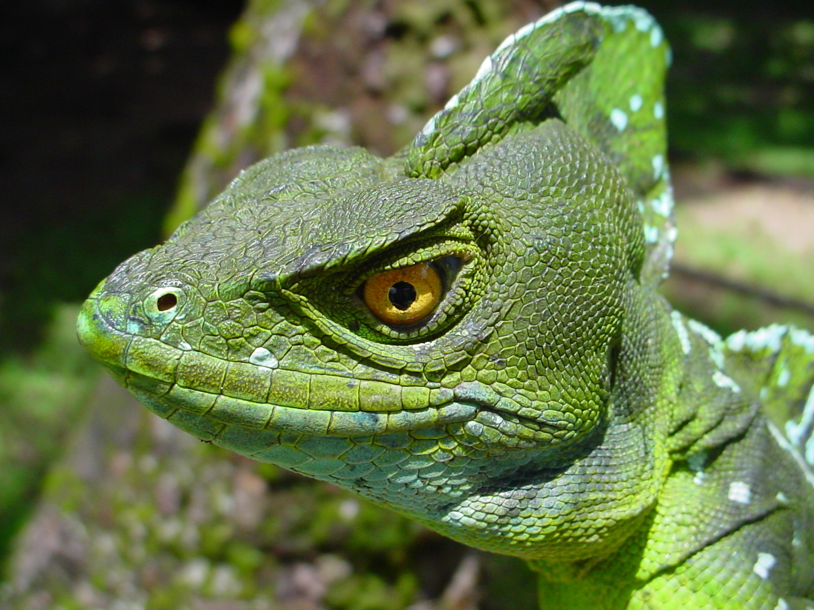 reptiles Photo