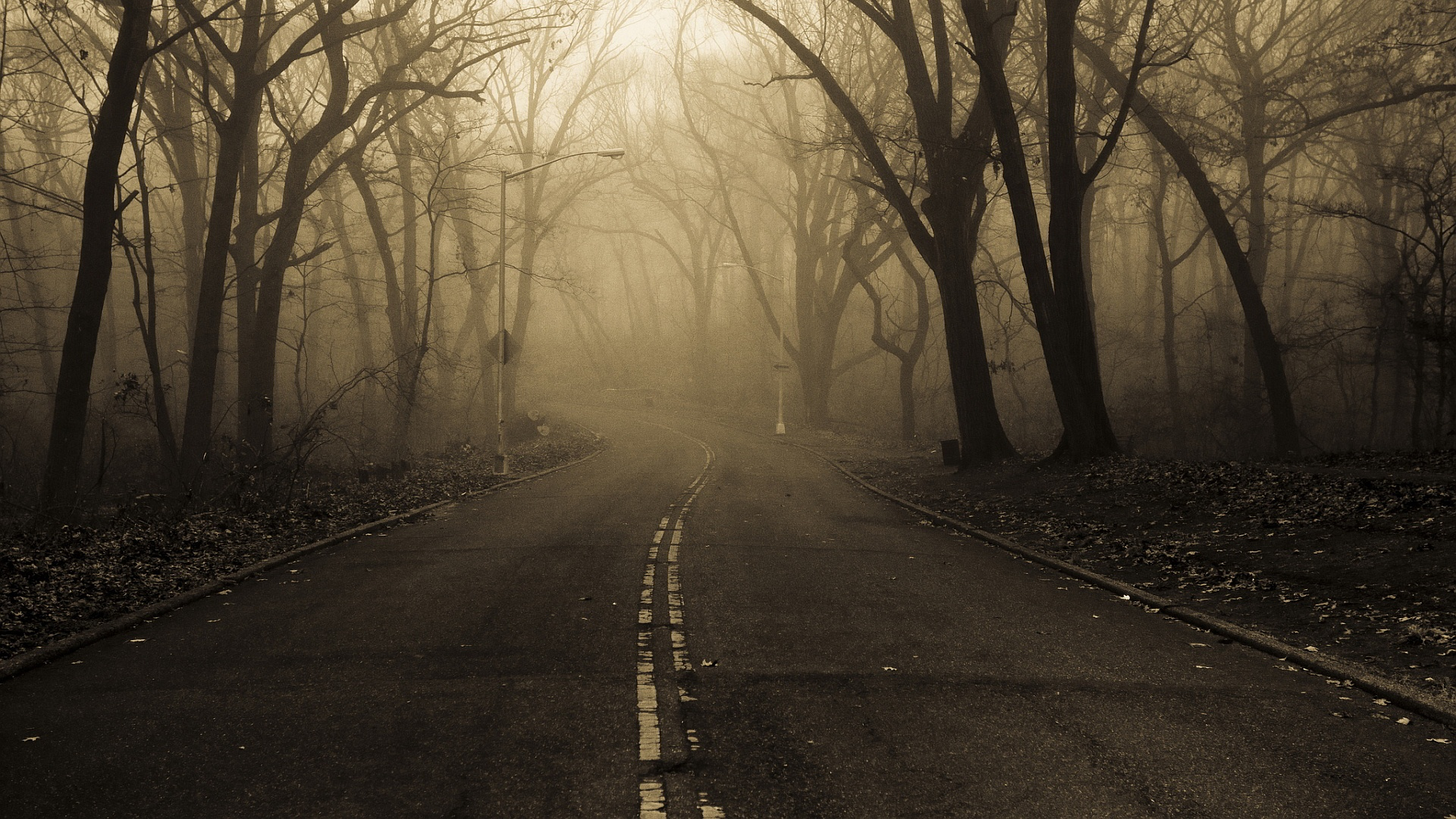 Road forest mist
