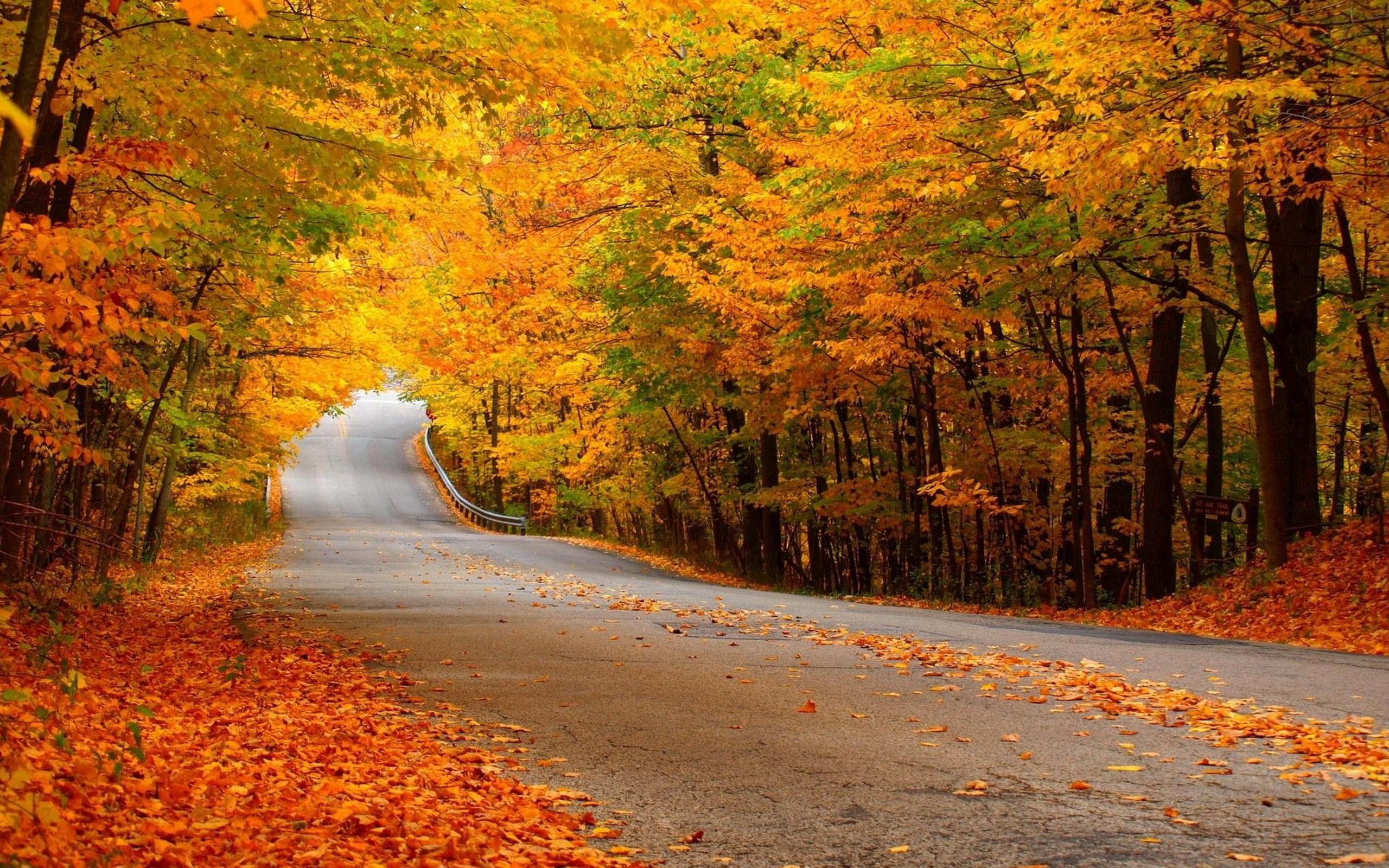 Road, forest, autumn, yellow leaves