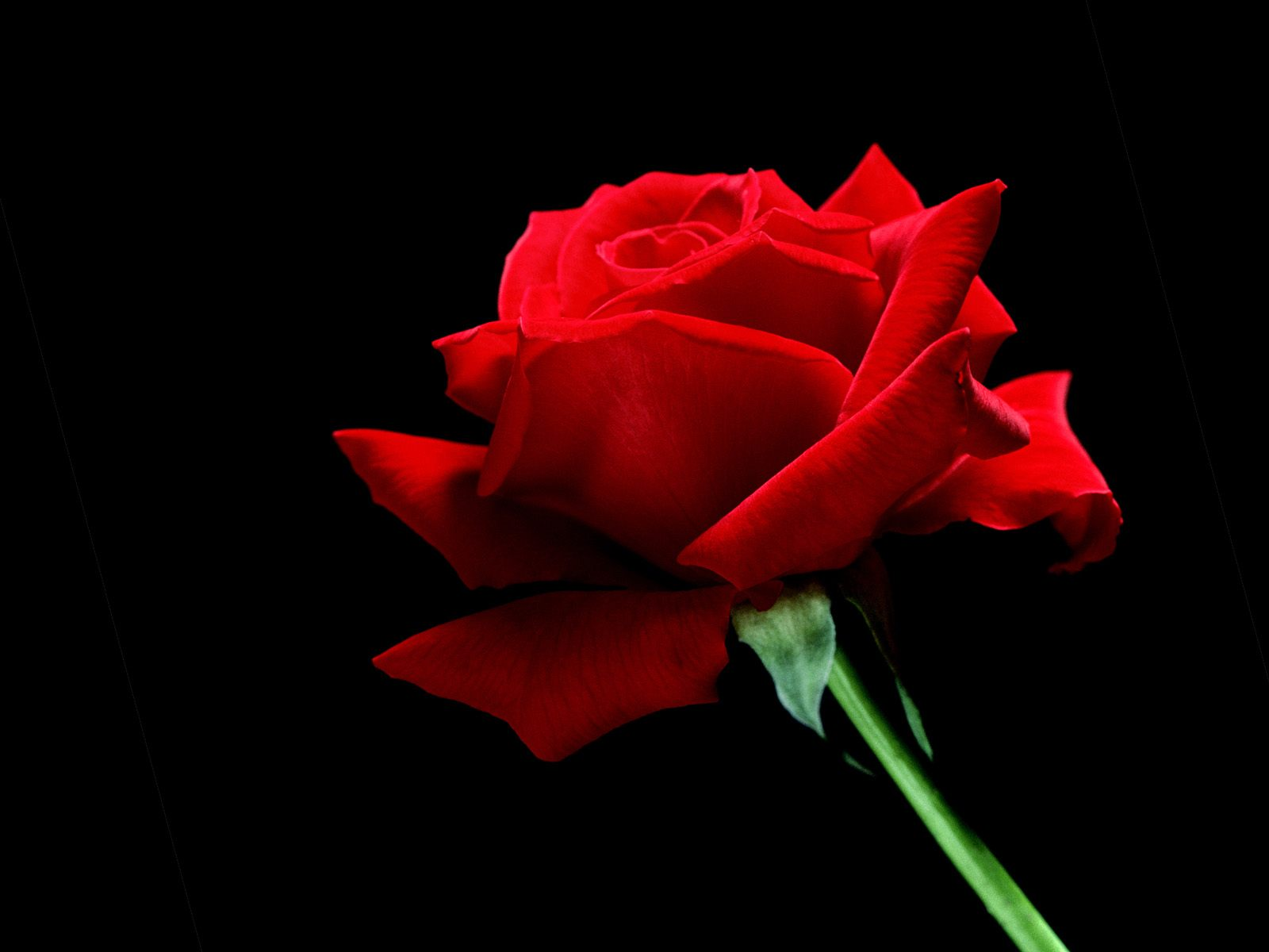 The red roses are given to women by men, to show love and passion. It also shows respect, and if a person showed great courage, she or he can expect red ...