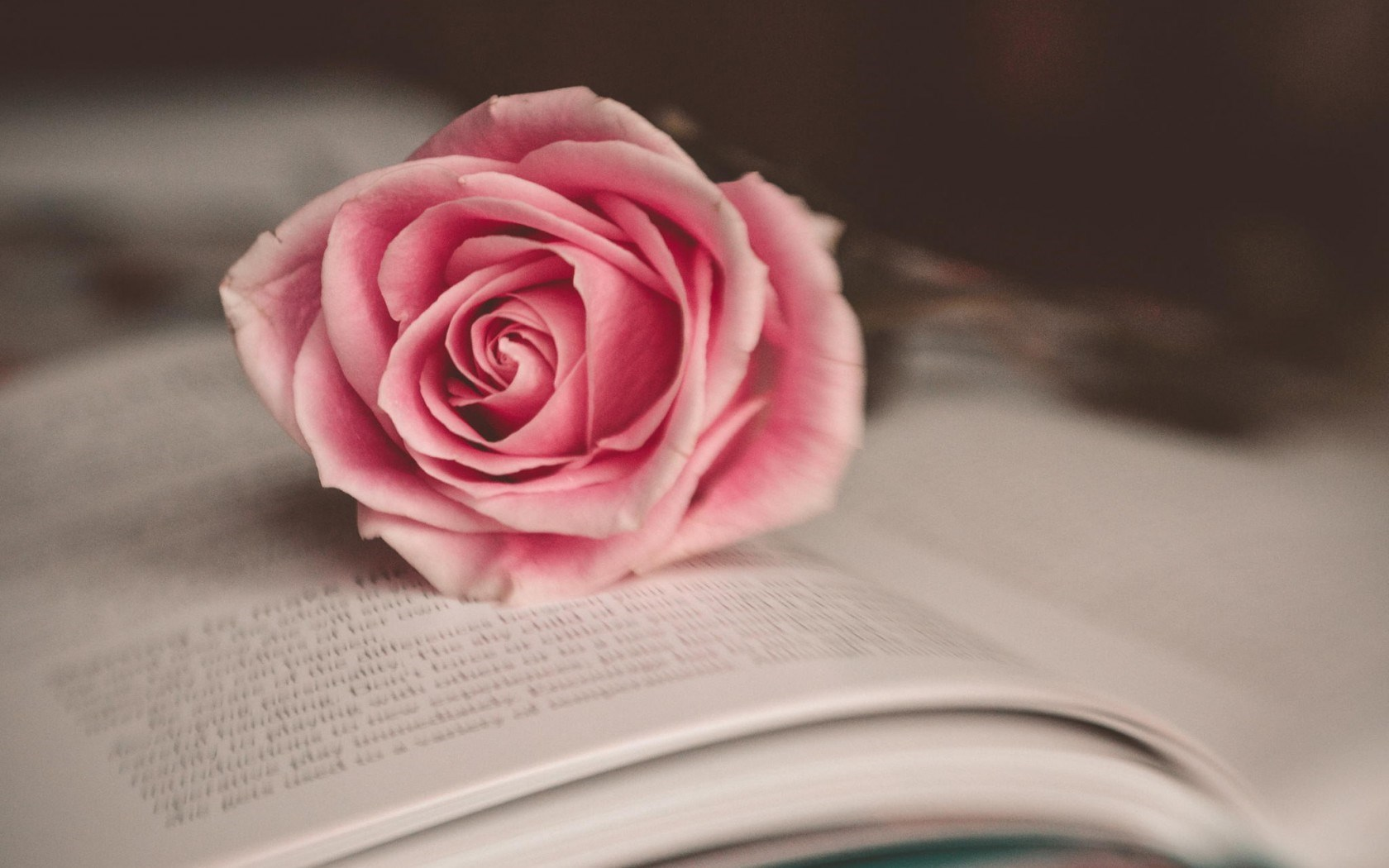 Rose Flower Book