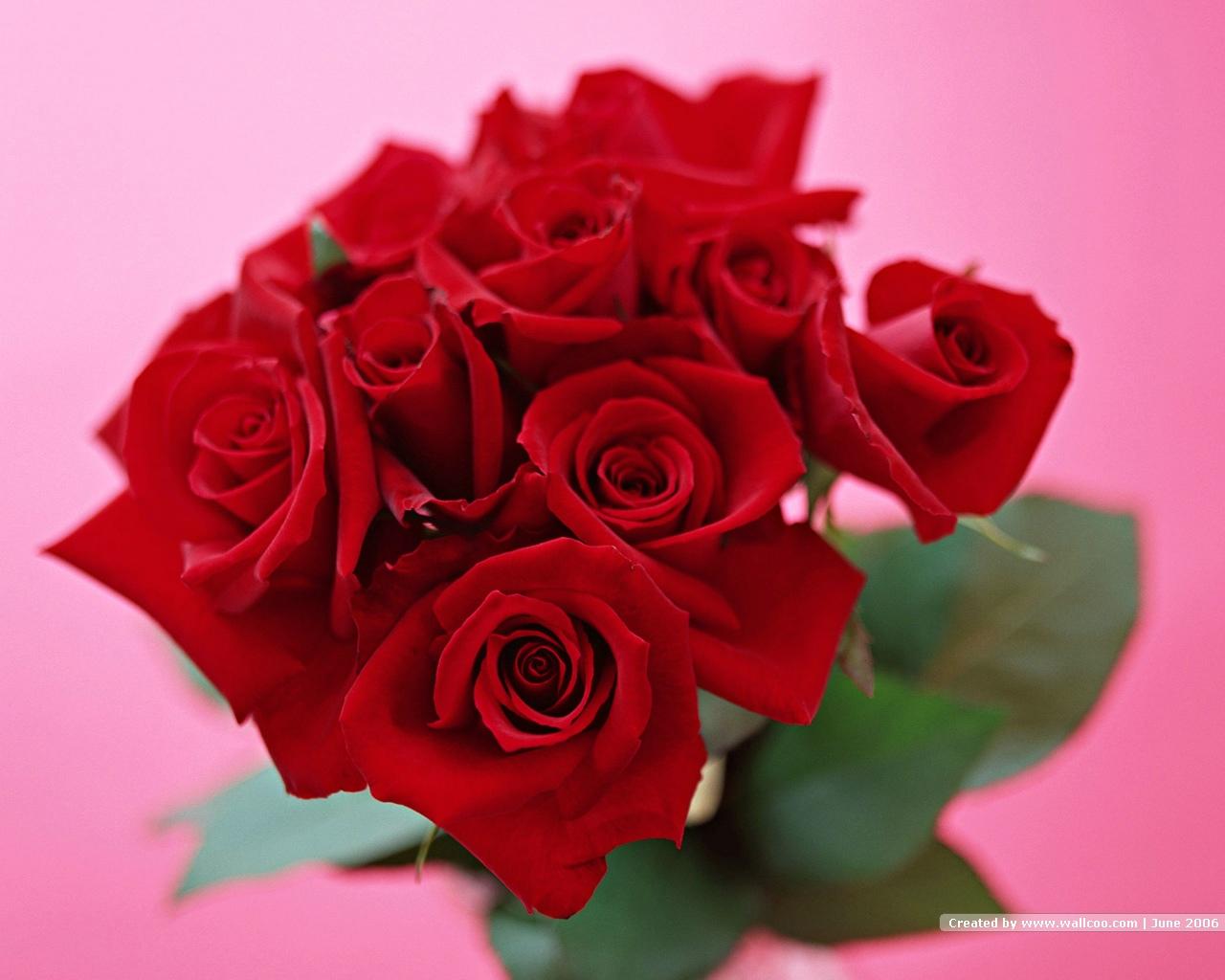 Rose Flower Pic
